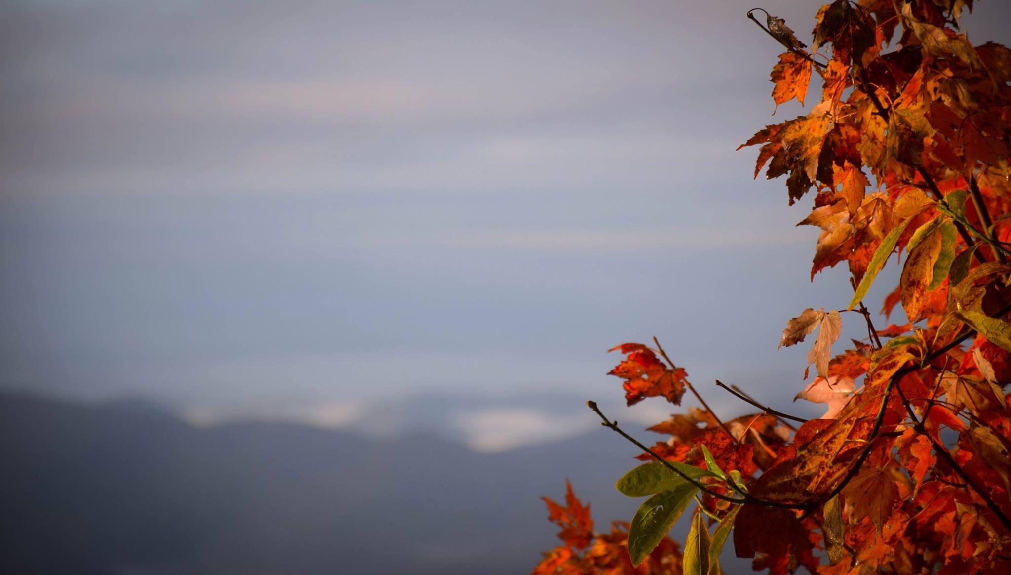 brown leaves at daytime