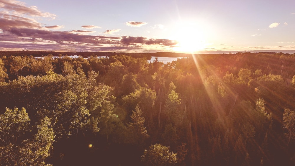 aerial photography of sunlight pass through tall trees