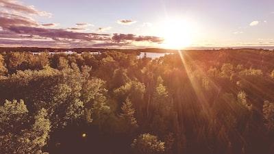 Sunrays over woods