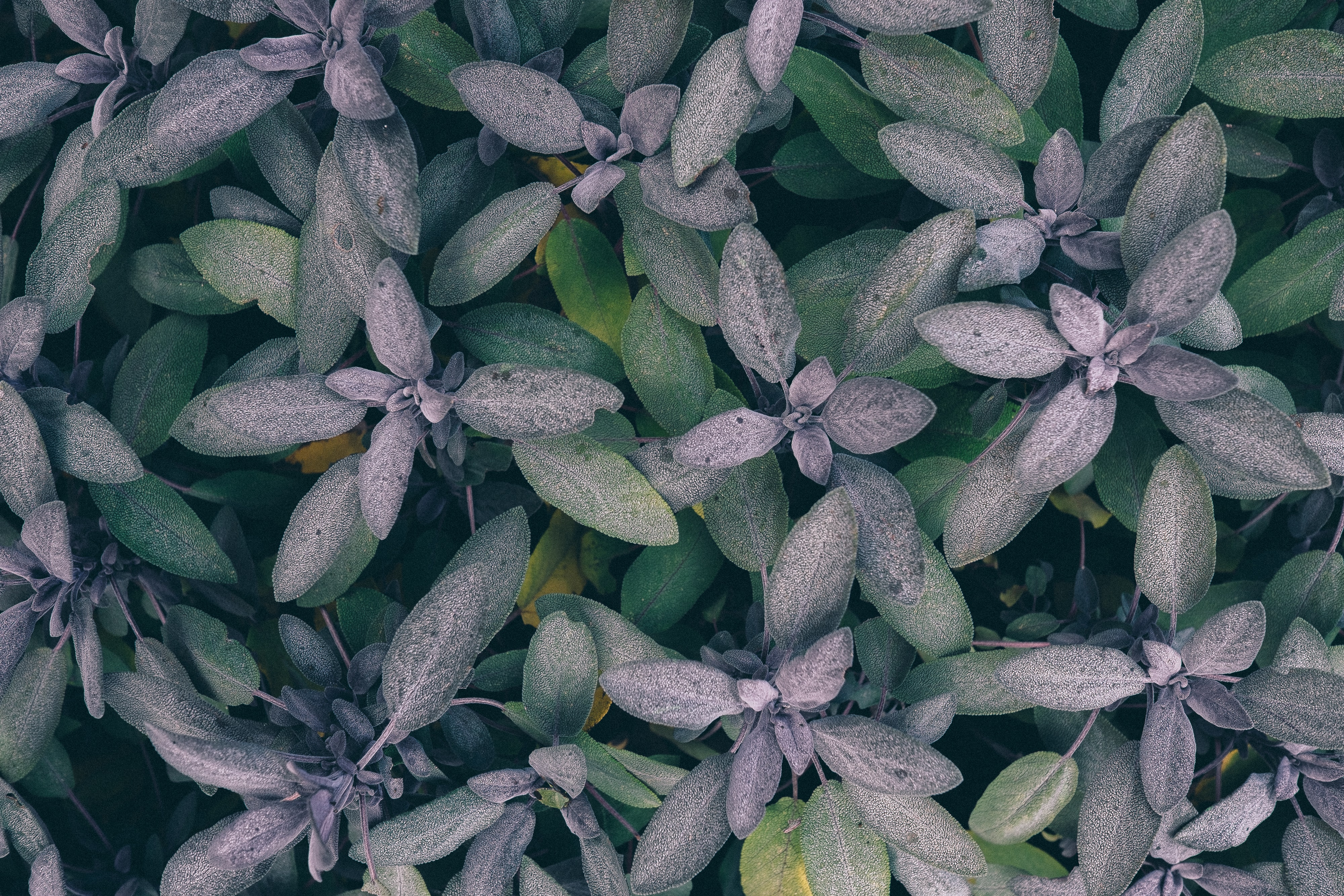 green-and-gray leaf plants