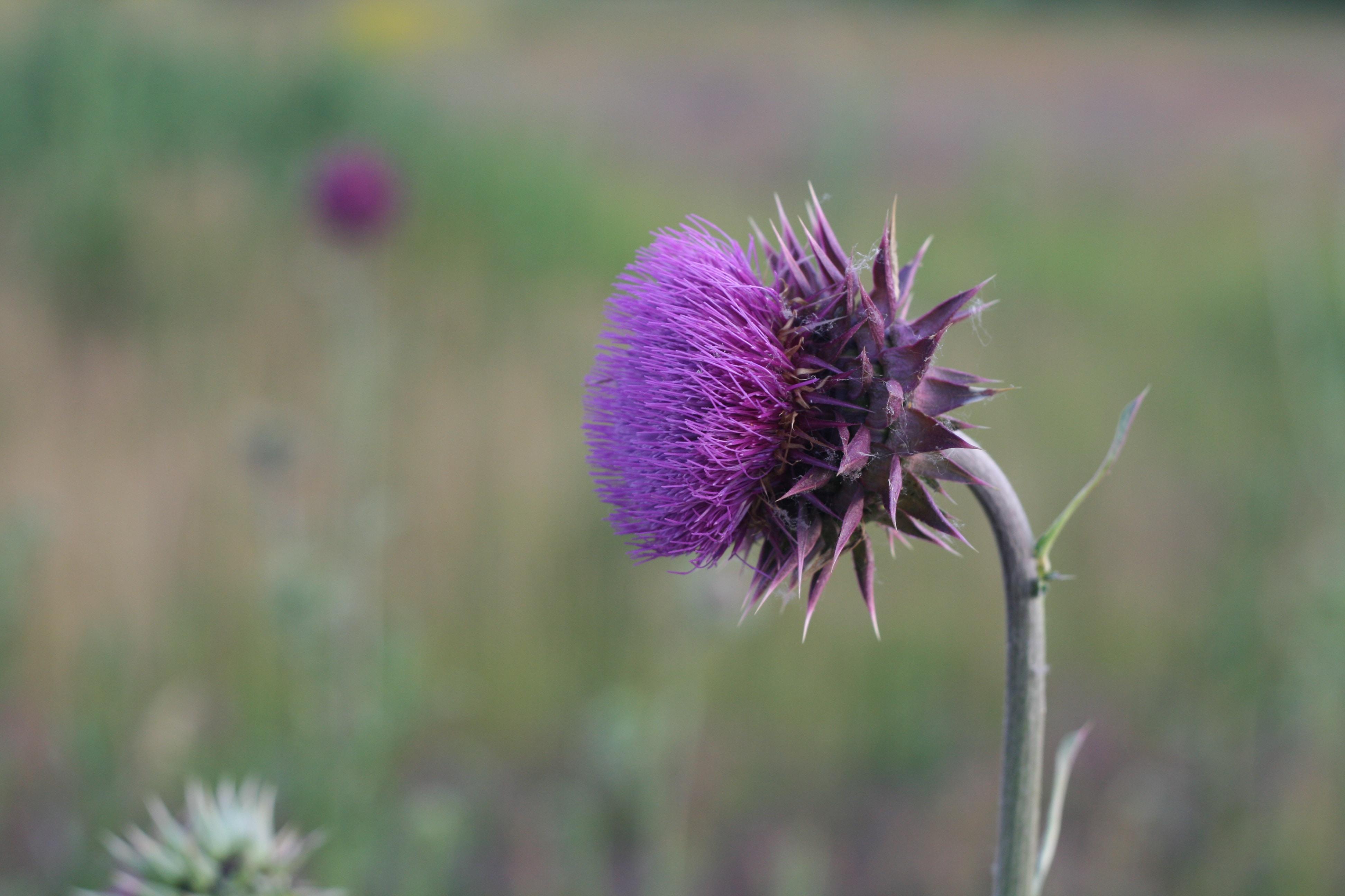 selective focus of purple flower
