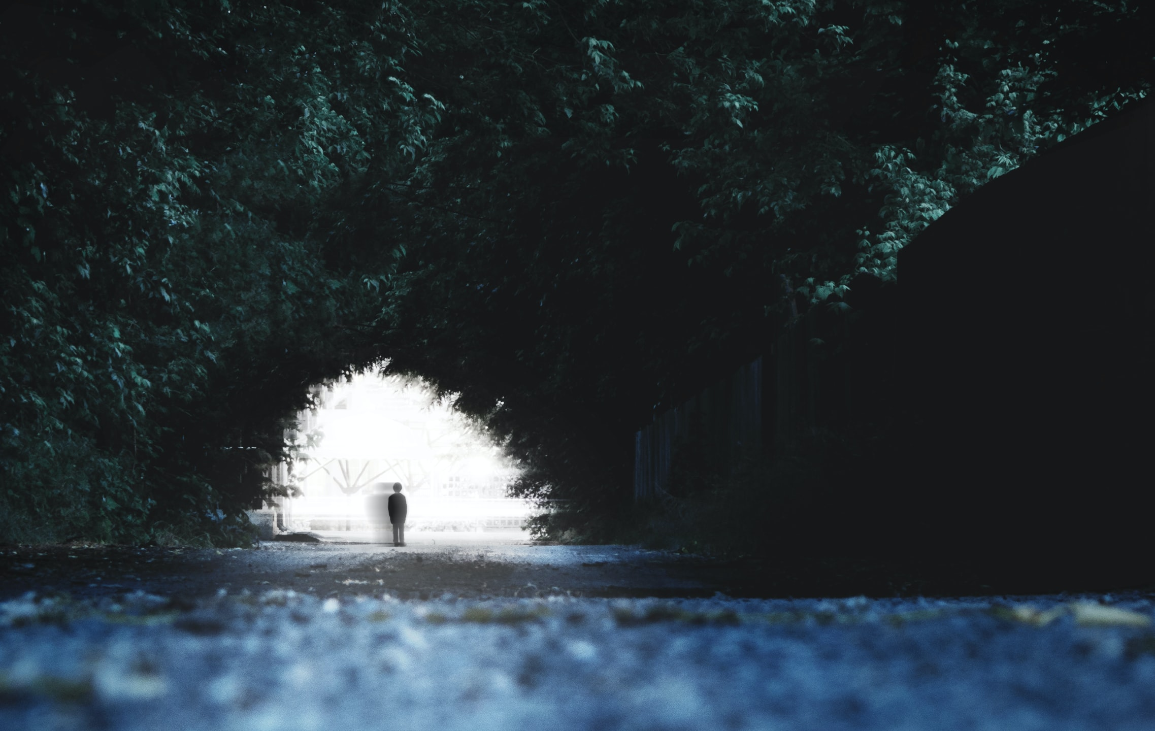 A shady silhouette of a person under a tree archway