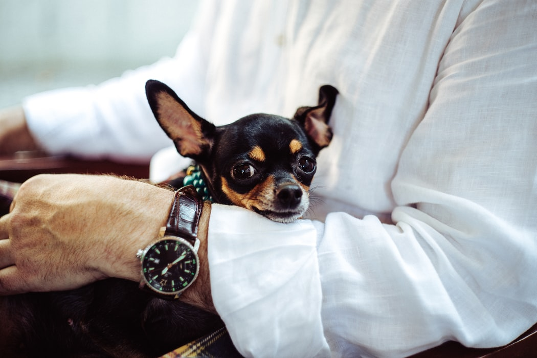 5 Reasons Why Having A Pet Can Increase Your Productivity 17