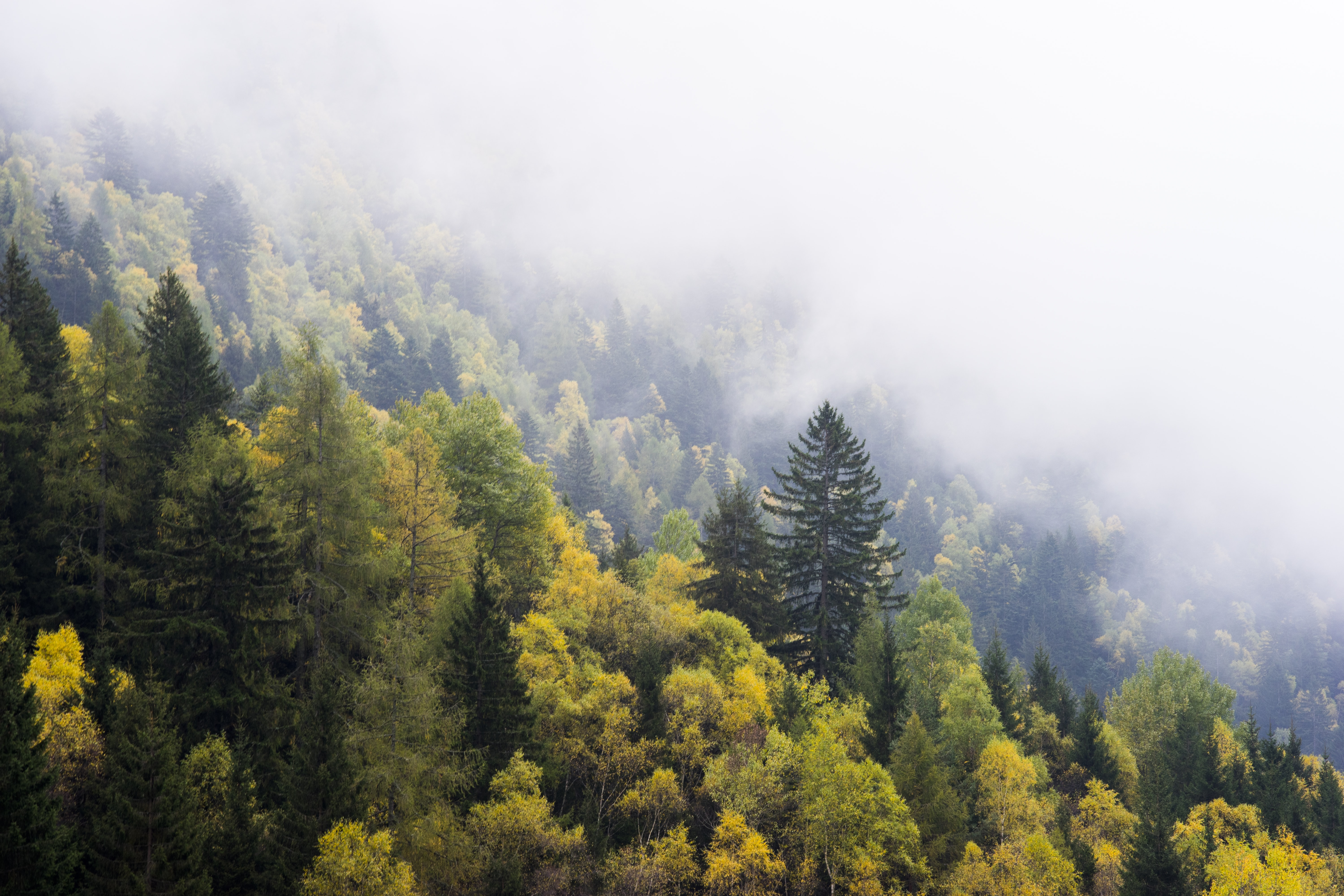 aerial view of yellow trees during fog