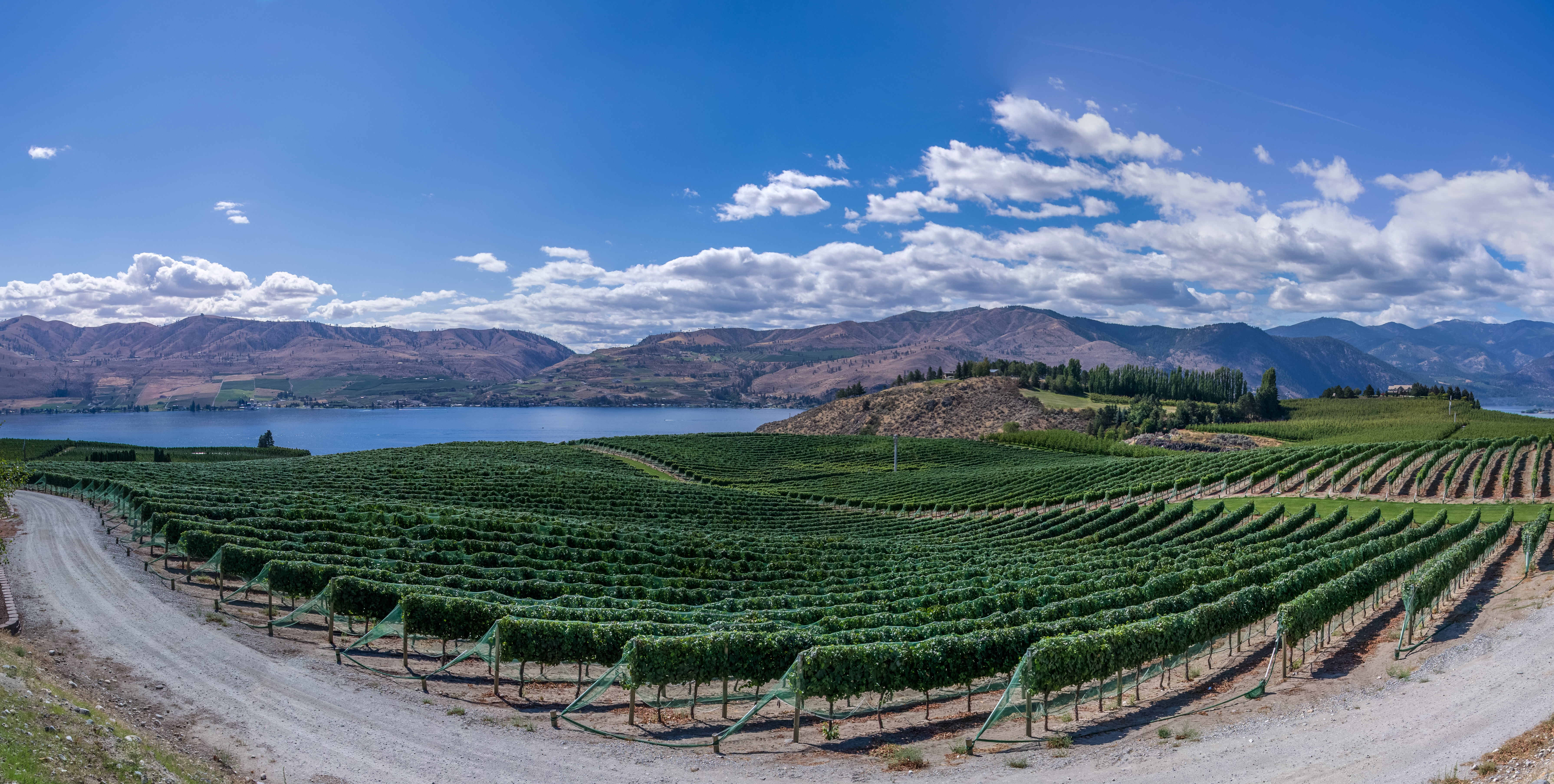 A panoramic view of a vineyard.