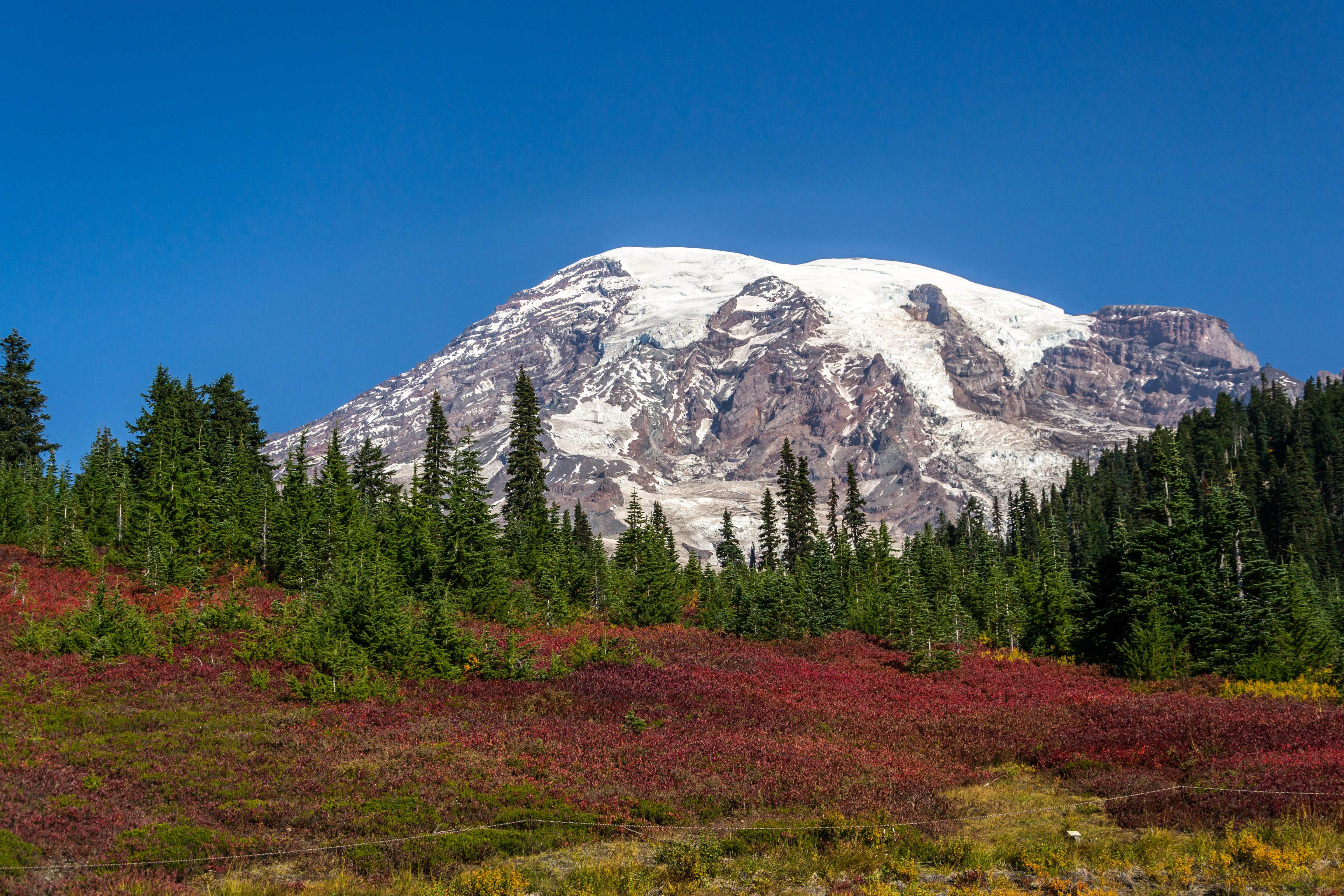 A red meadow and an evergreen forest at the foot of a snowy mountain