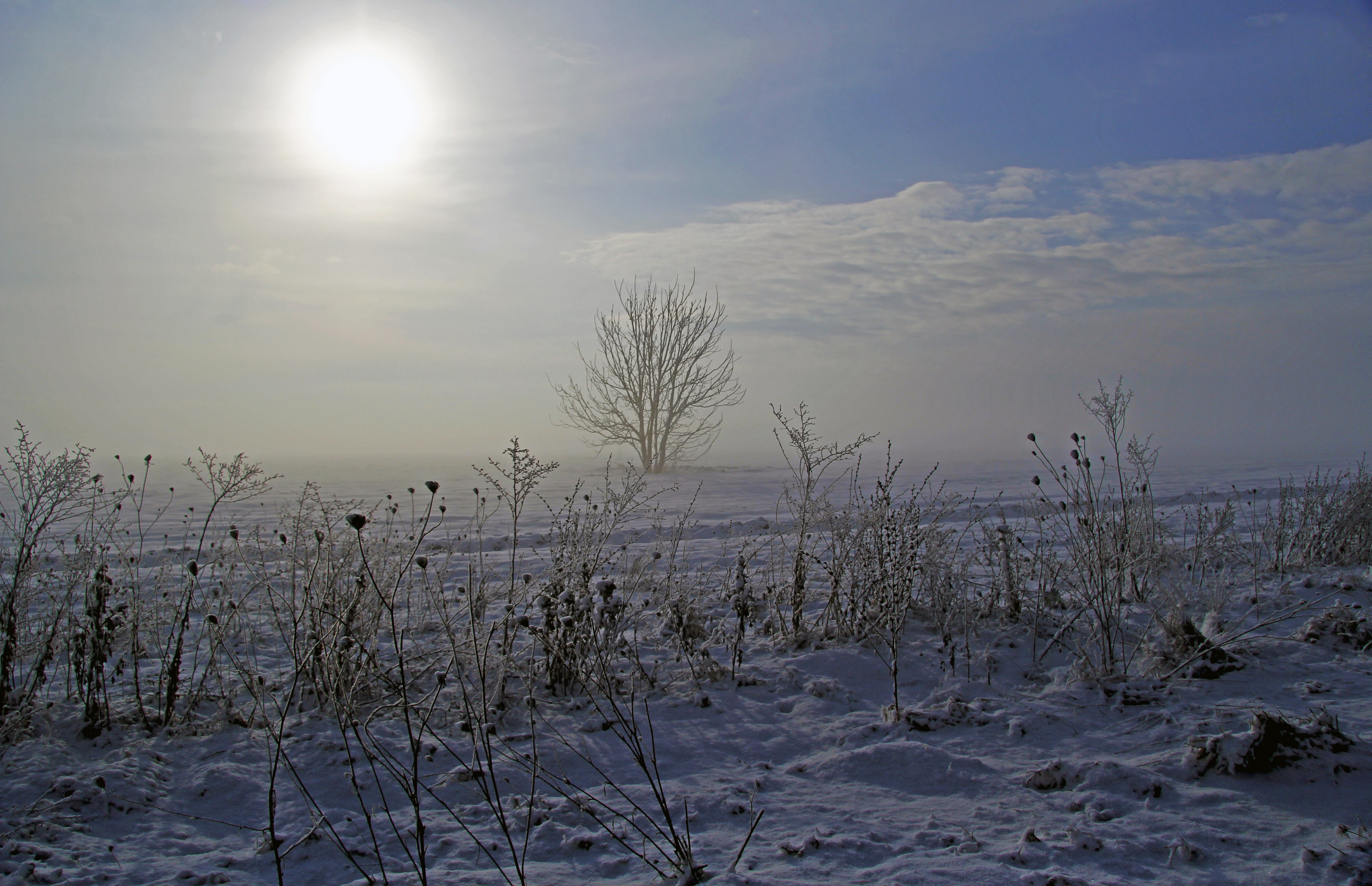 Tall wild grasses and a distant leafless tree under a pale sun on a freezing winter's day
