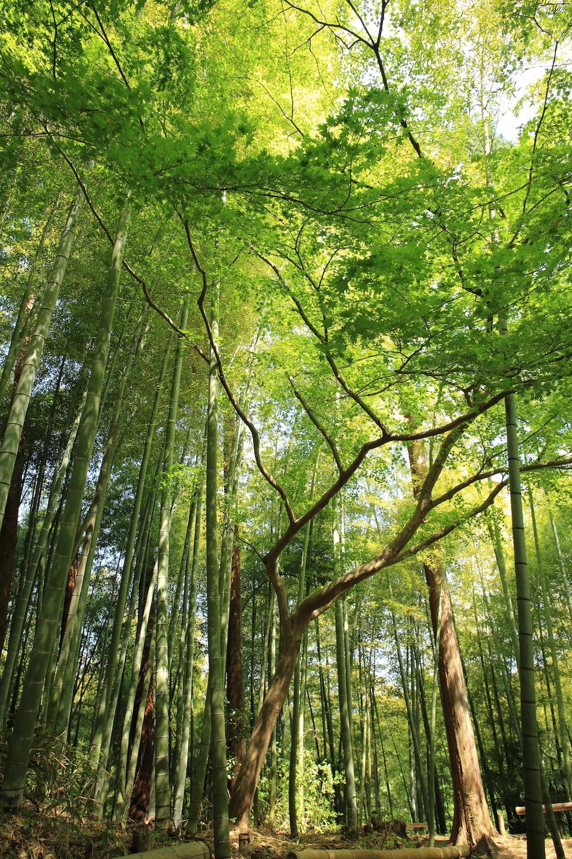 forest under white sky