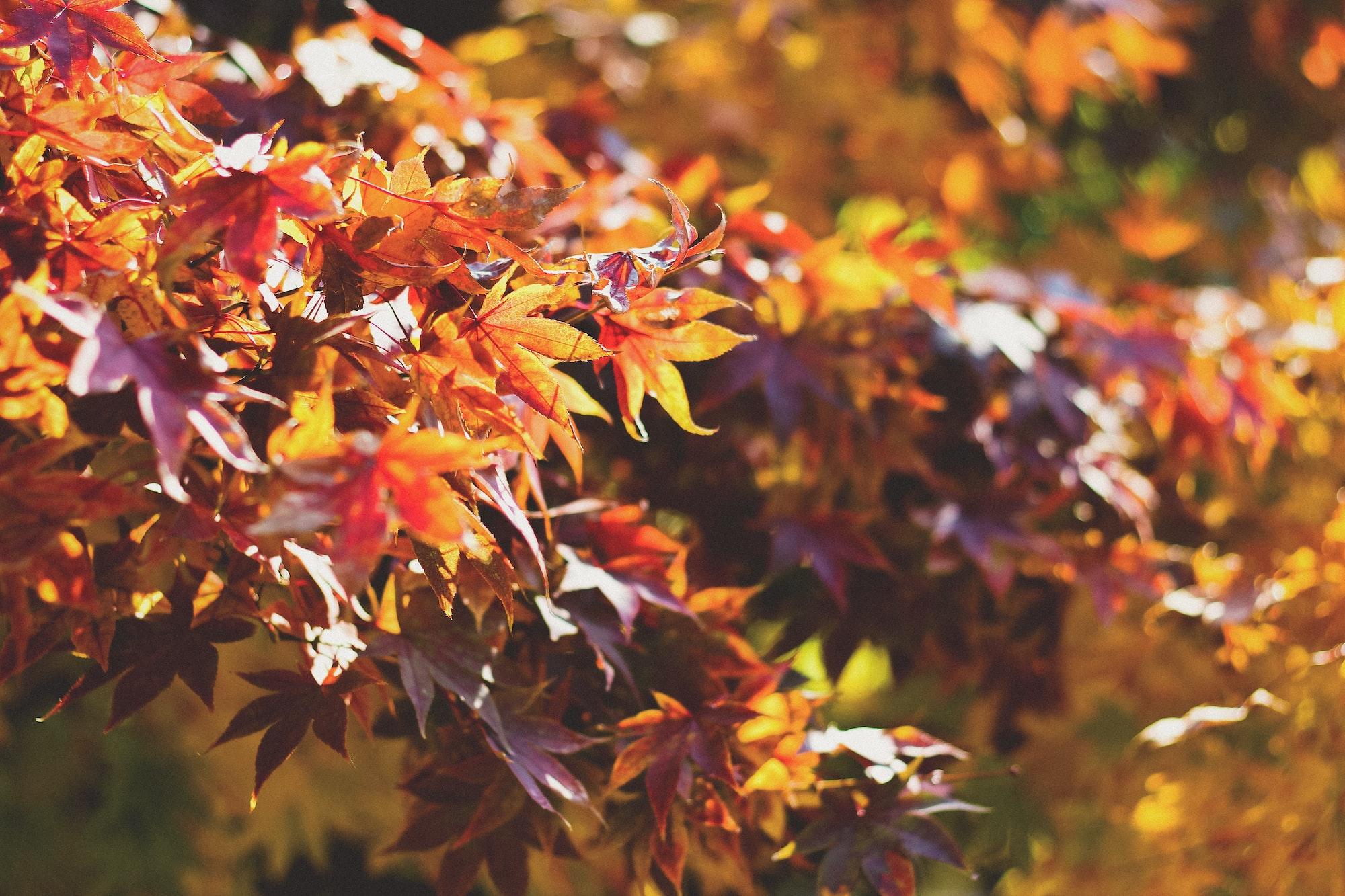 Urbana autumn