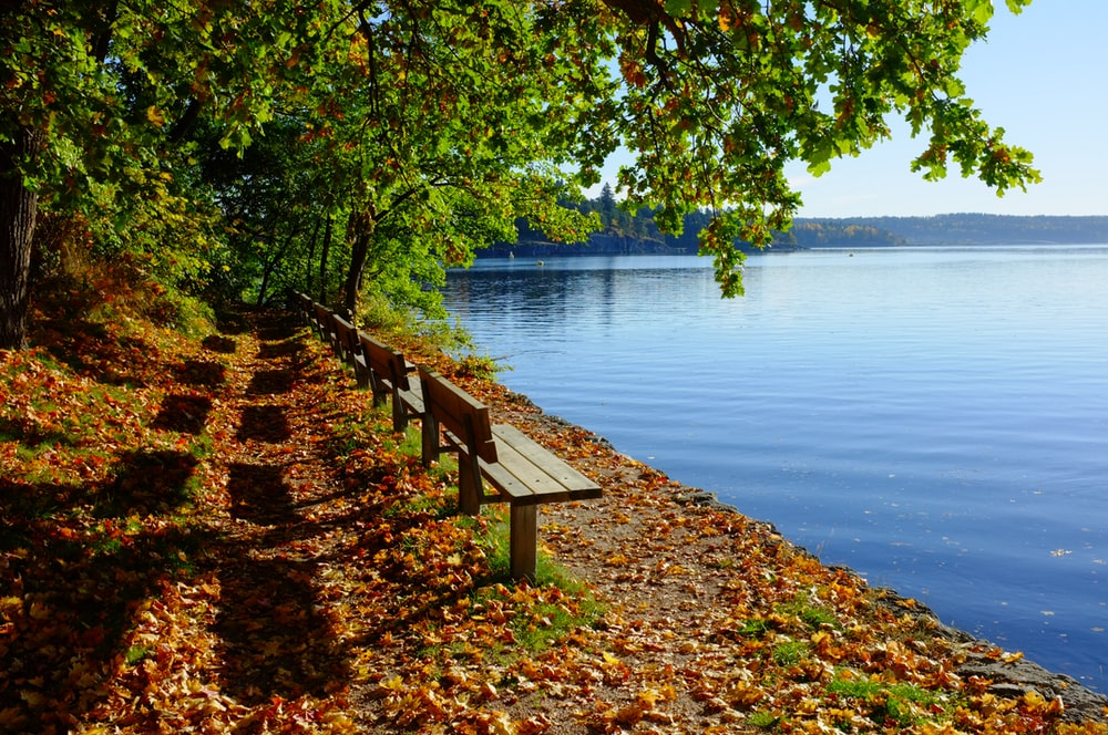 brown wooden bench near body of warter