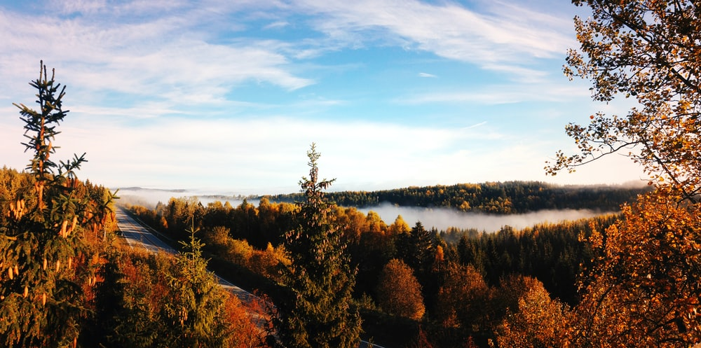 panoramic photography of body of water surrounded with trees