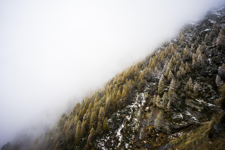 white fog over pine trees on mountain