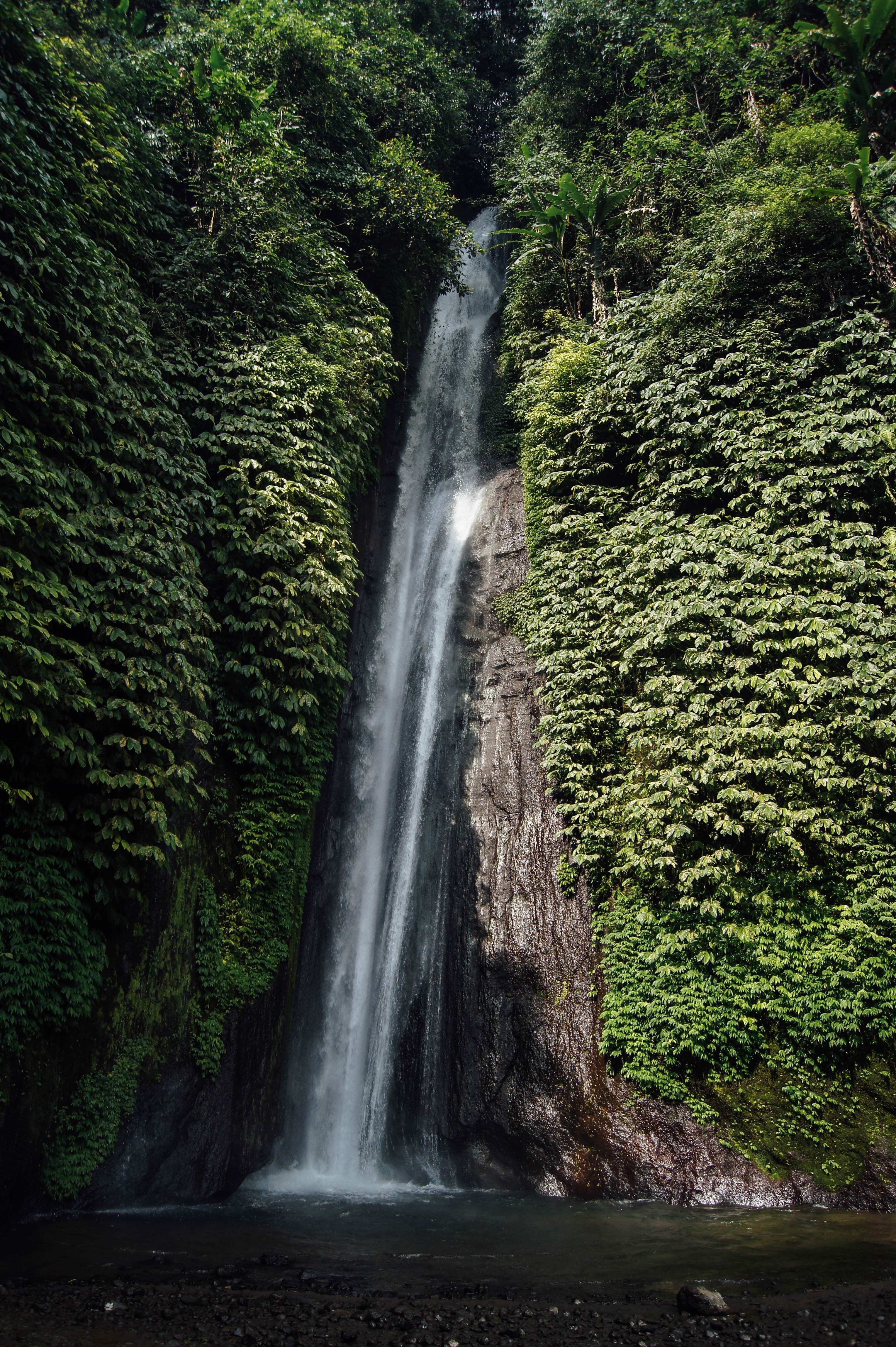 A tall waterfall tumbling down a steep rock face covered with green ivy