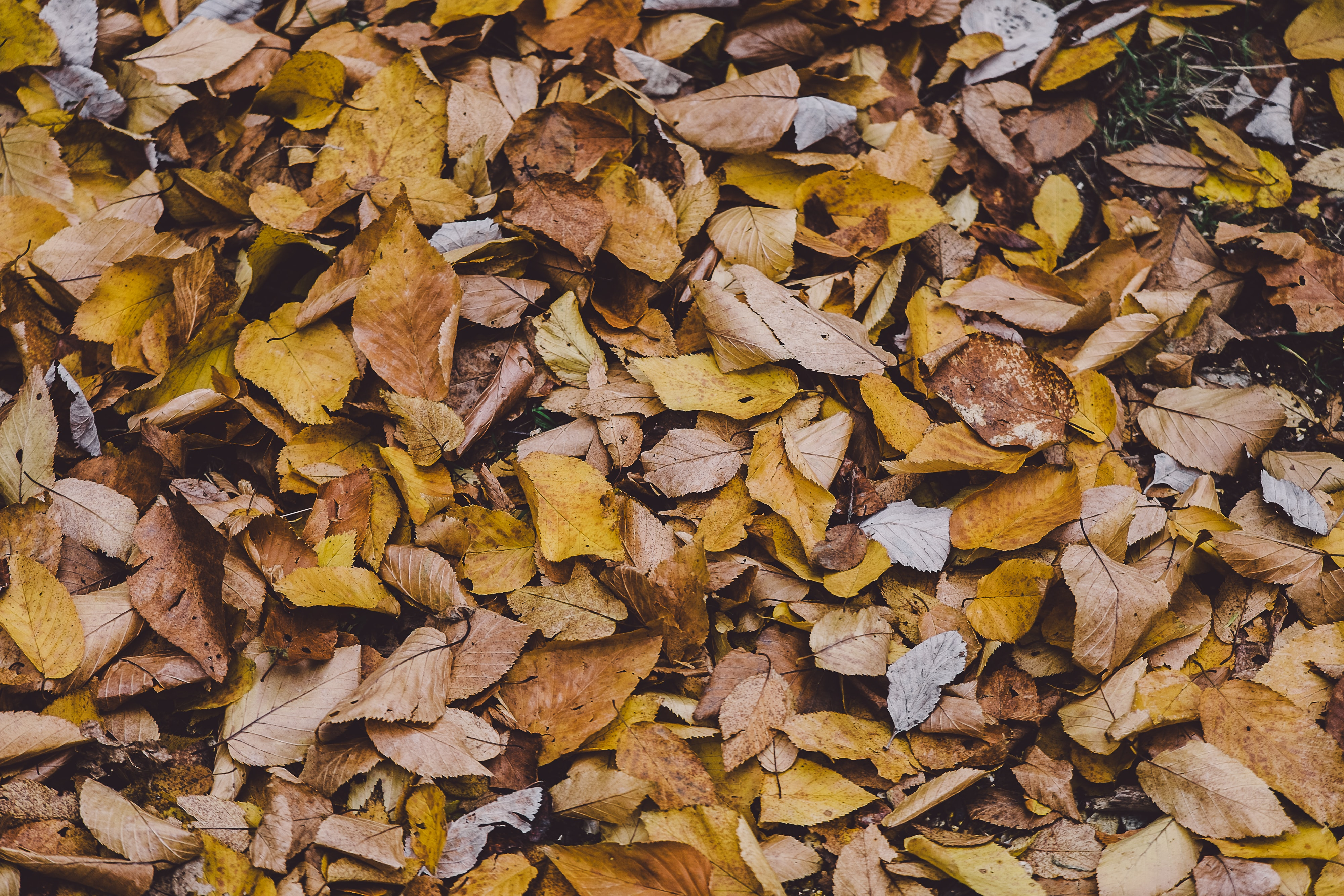 An overhead shot of autumn leaves on the ground