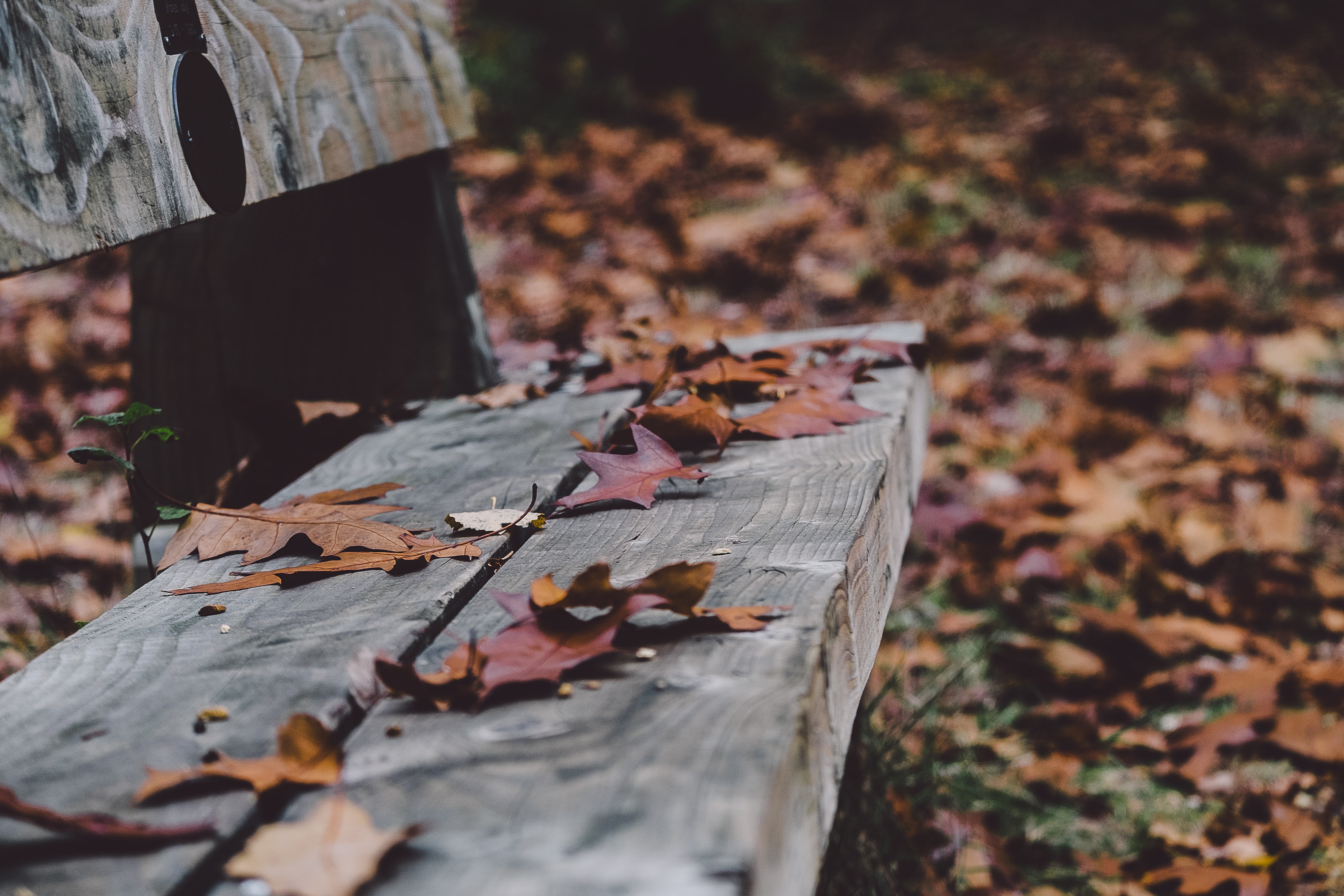 Dried Autumn-colored leaves on a wooden park bench.