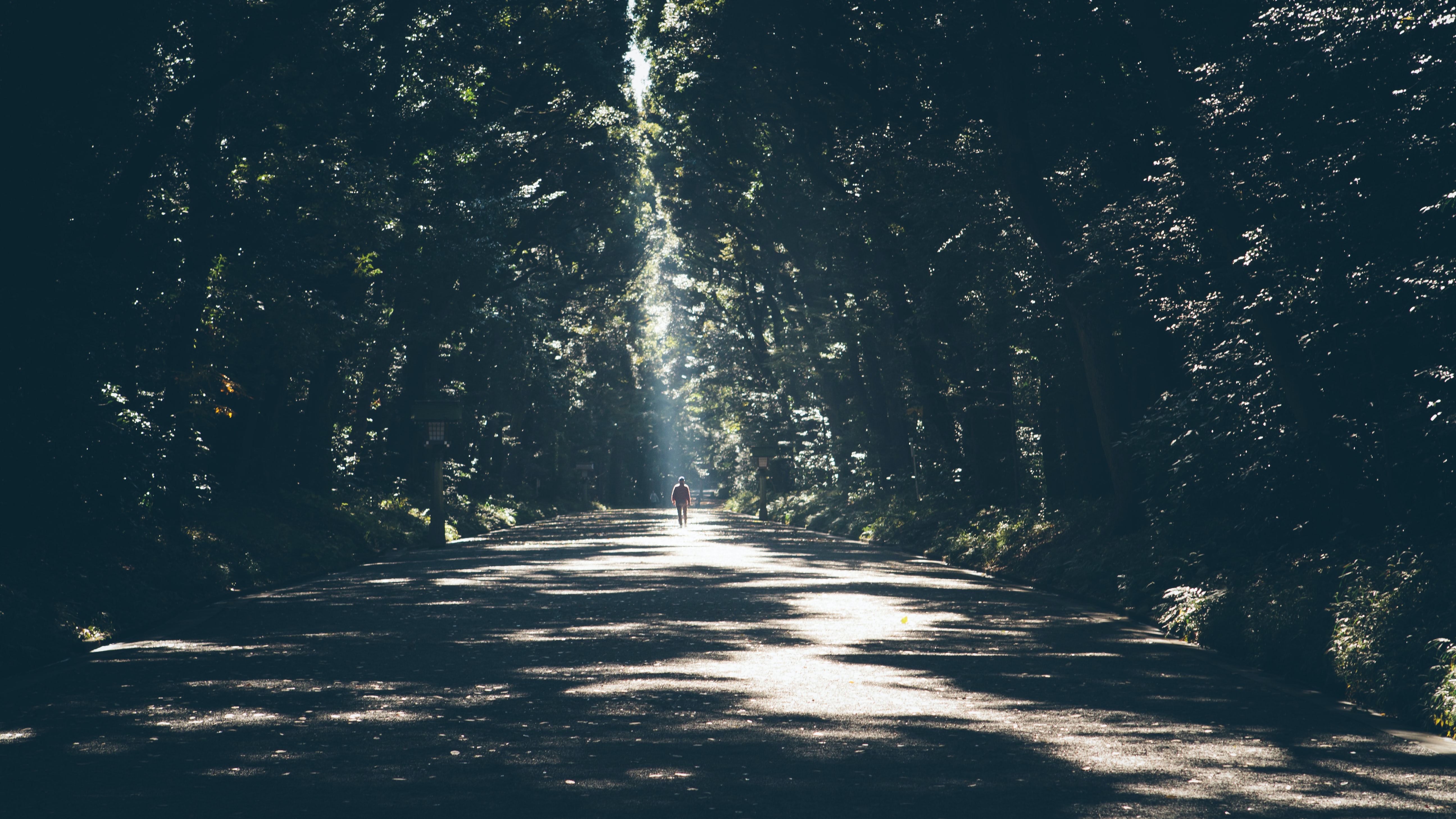 A silhouette of a person on a sunlit tree-lined road