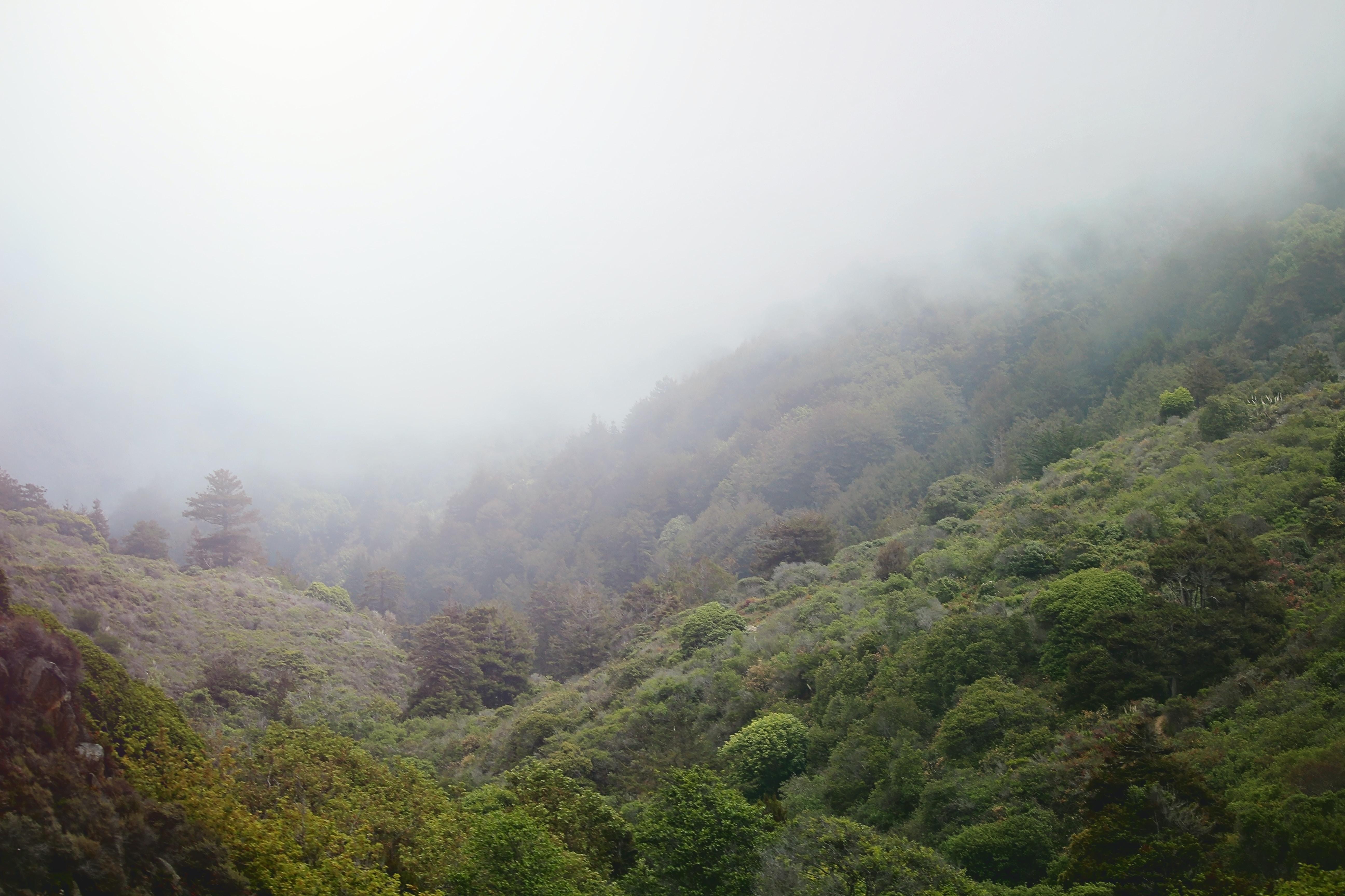 Pale mist over wooded hills in Big Sur