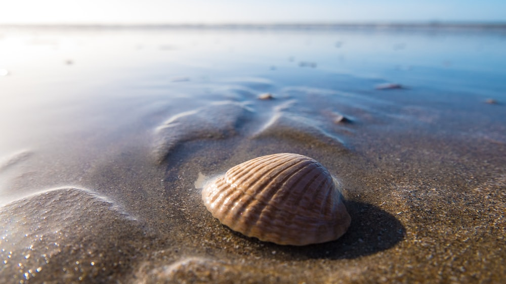 clam shell on body of water