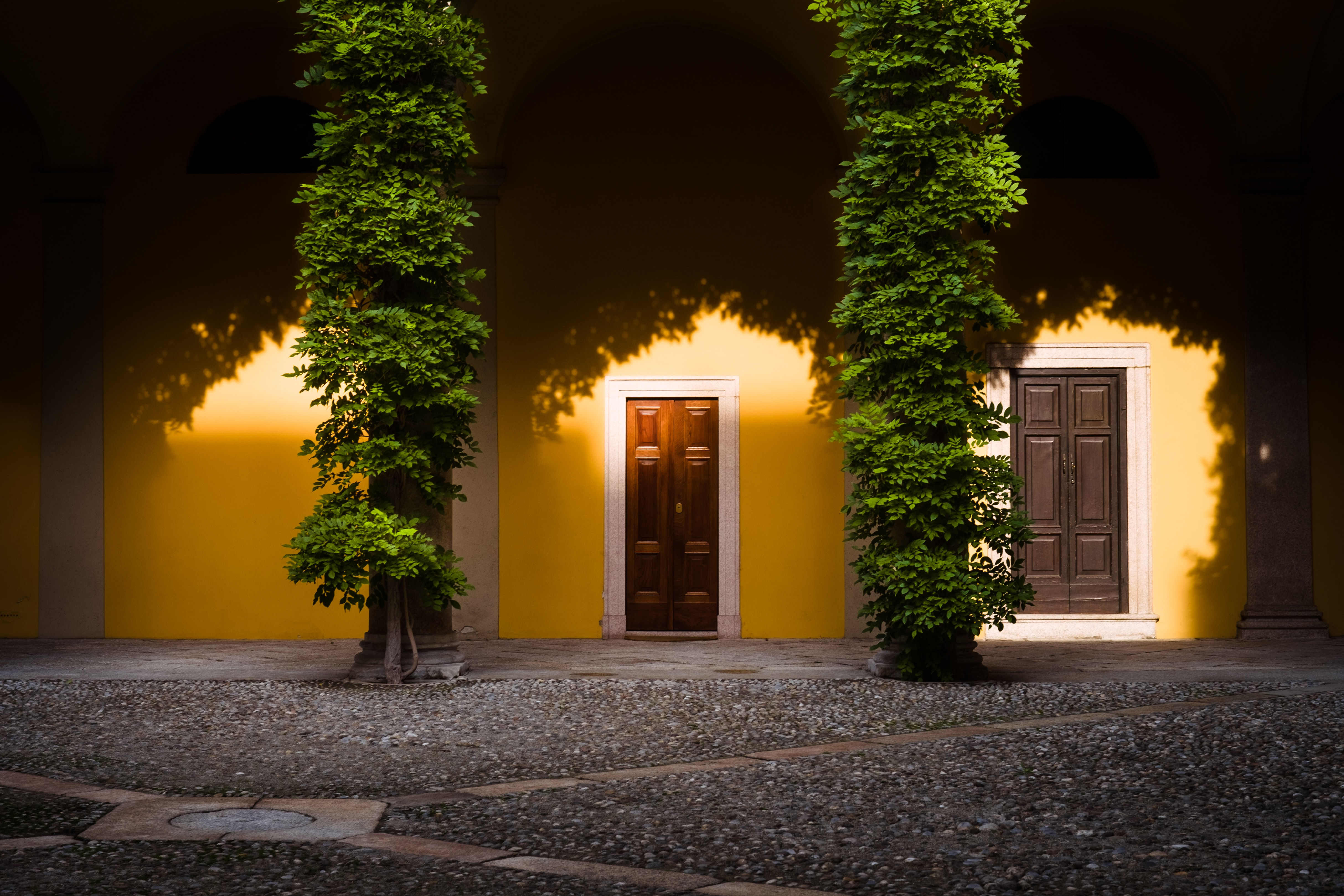 two green leafy plants on yellow wall