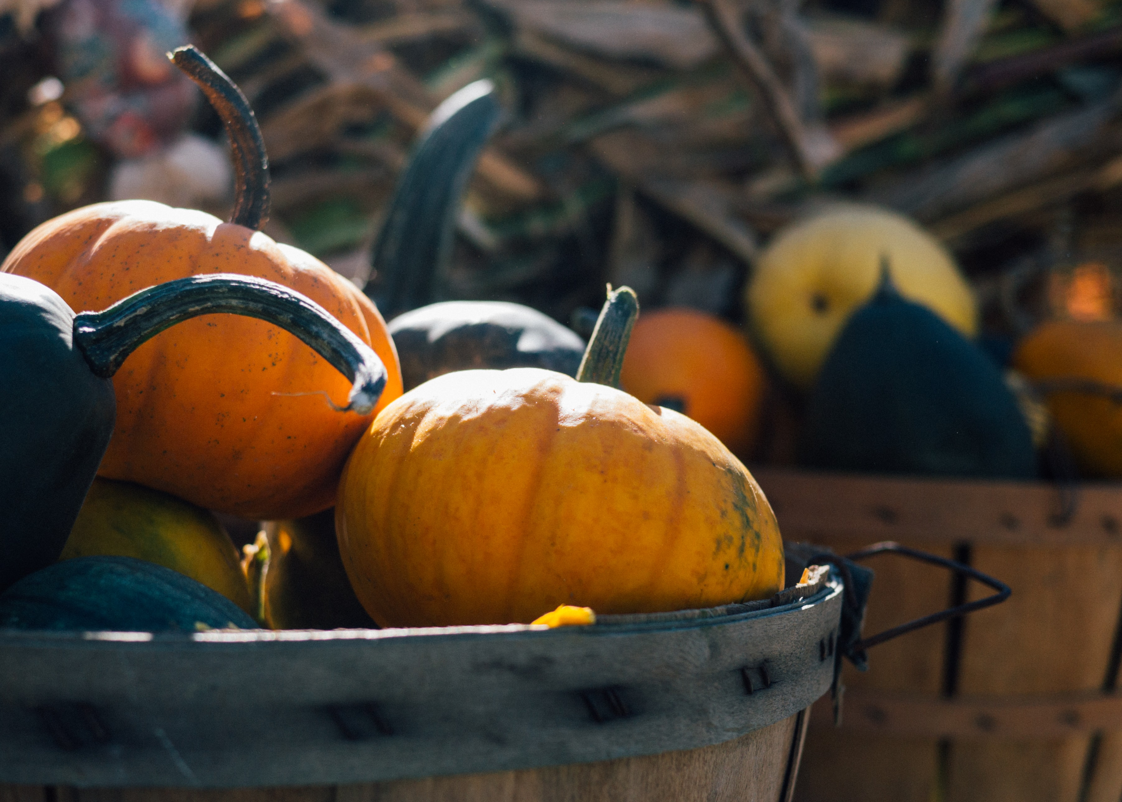 A macro view of a wooden bucket with a ribbon round it containing pumpkins of different colors in Scotland
