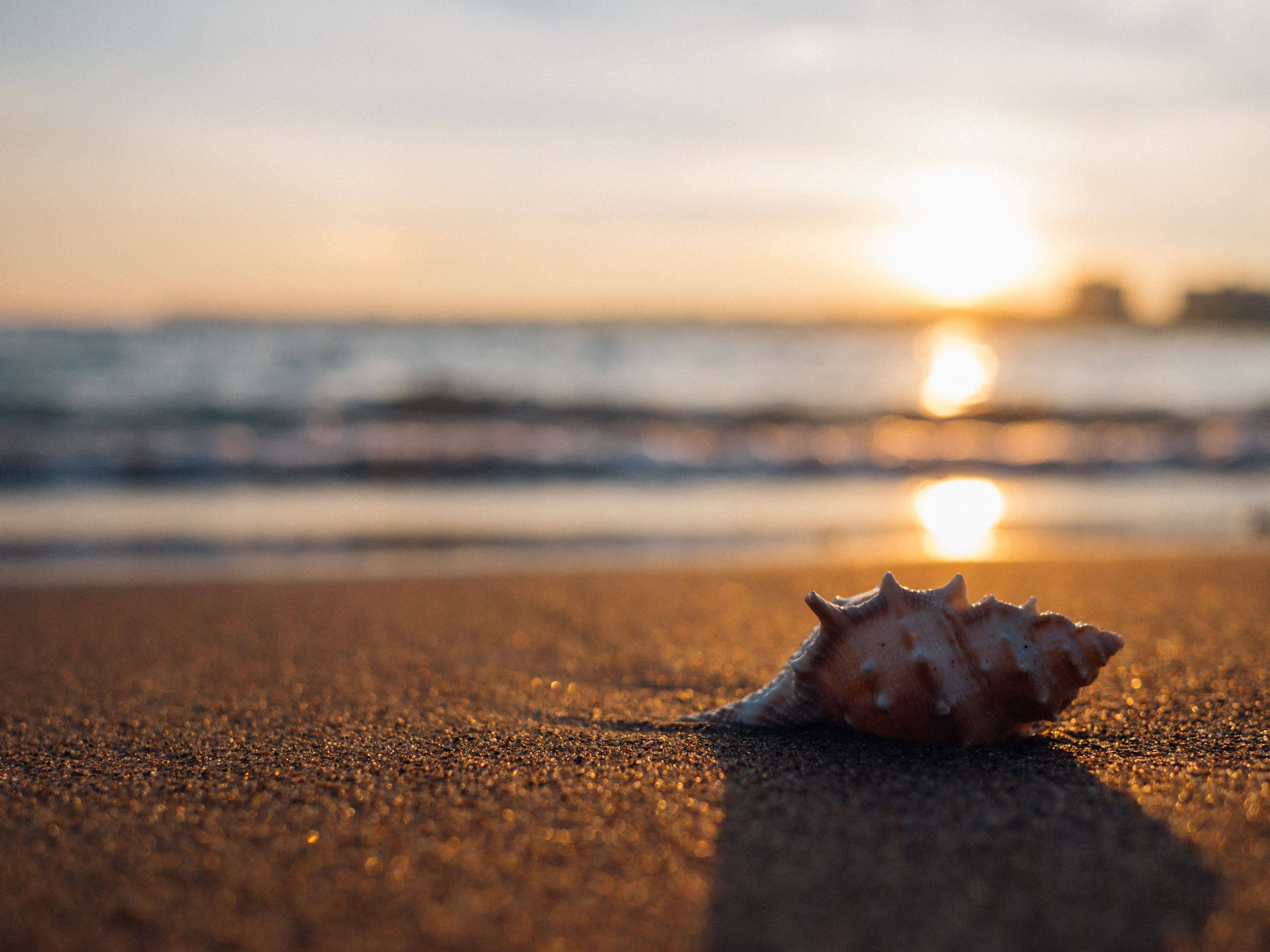 Shell on the fine sand beach during sunset