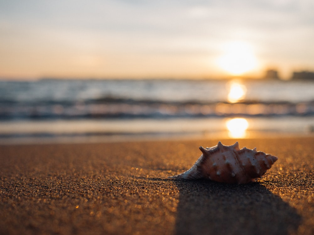 gray seashell on the seashore selective focus photography