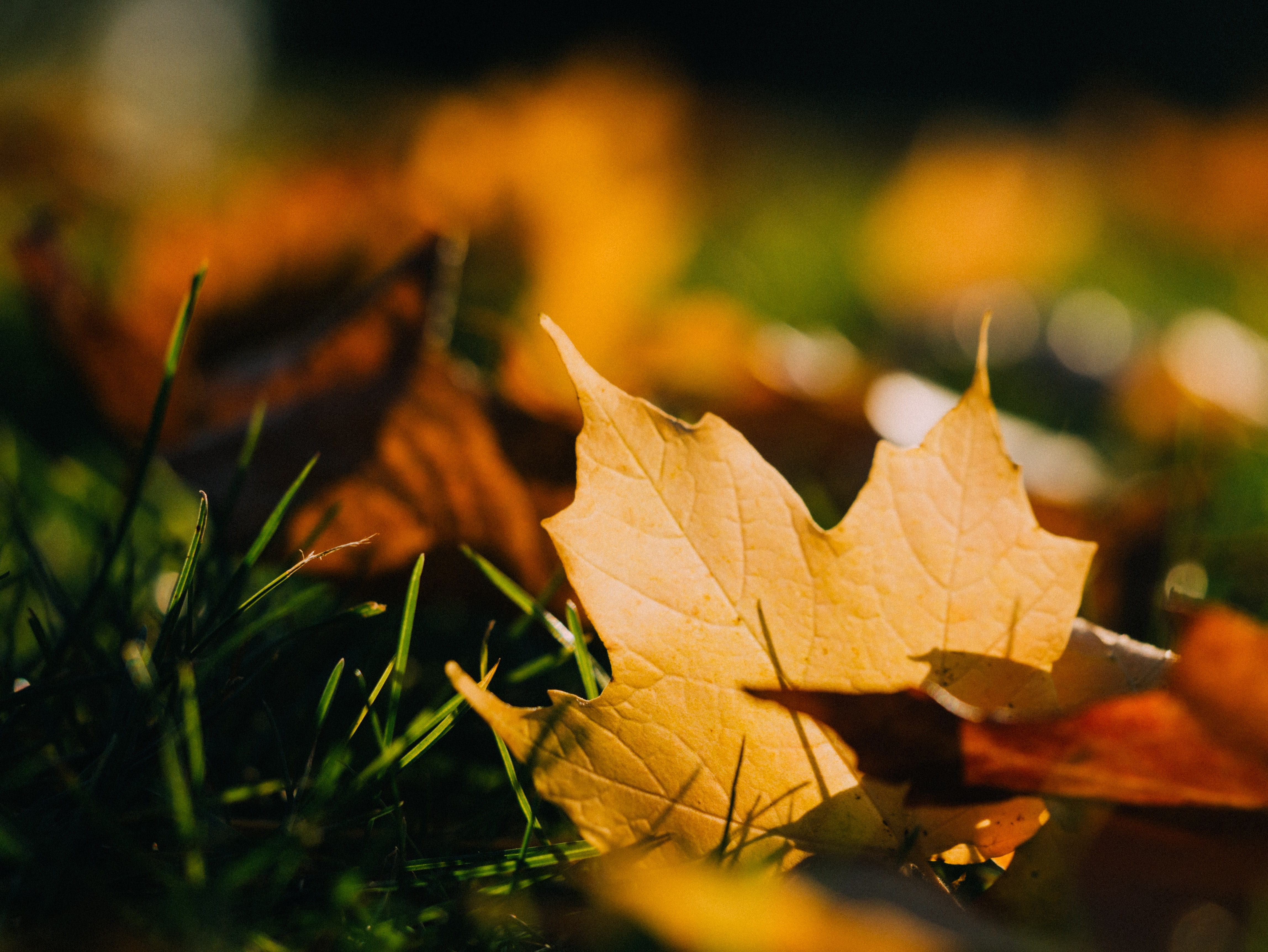 A yellow leaf in the grass.