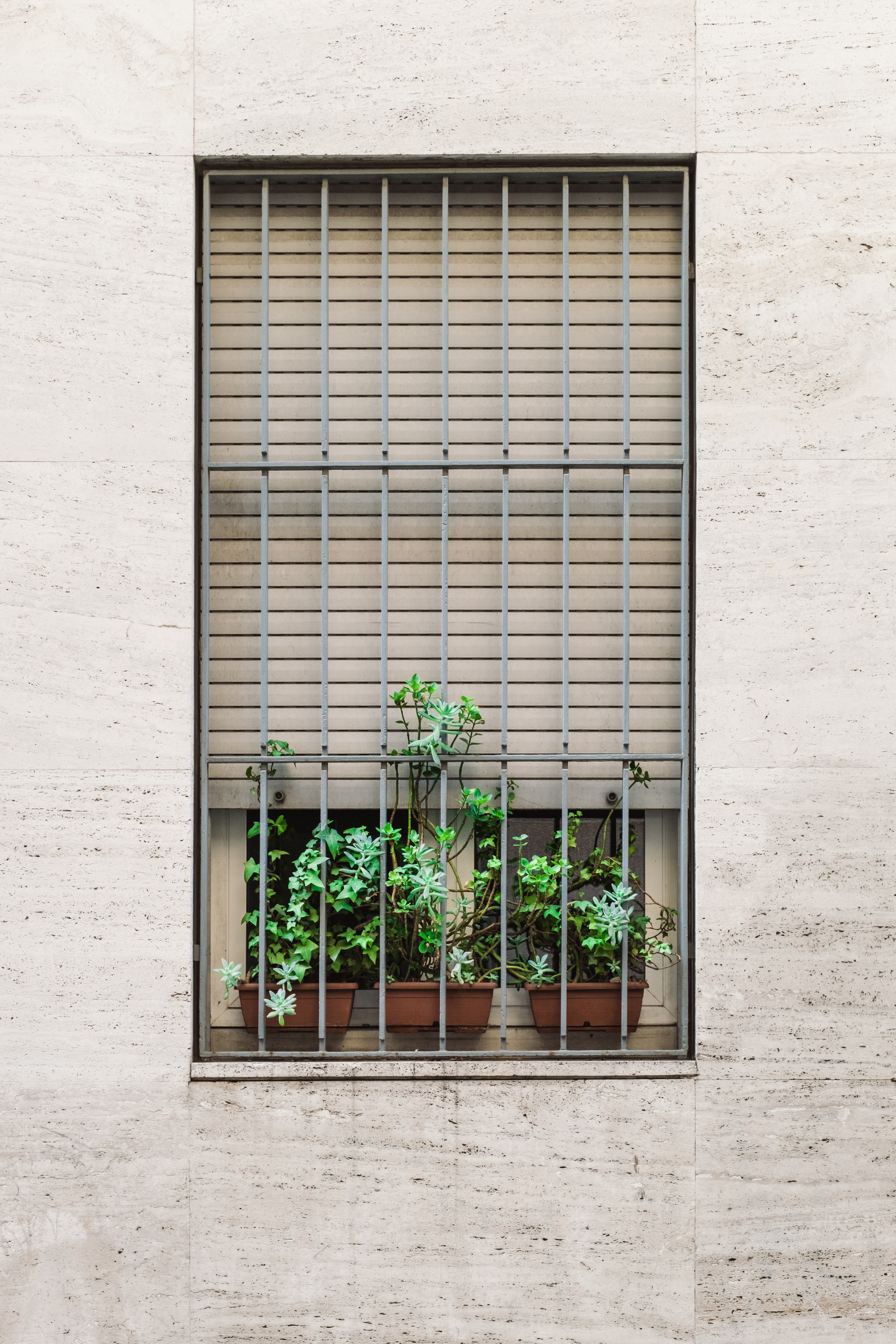 green plants on the window with steel grill