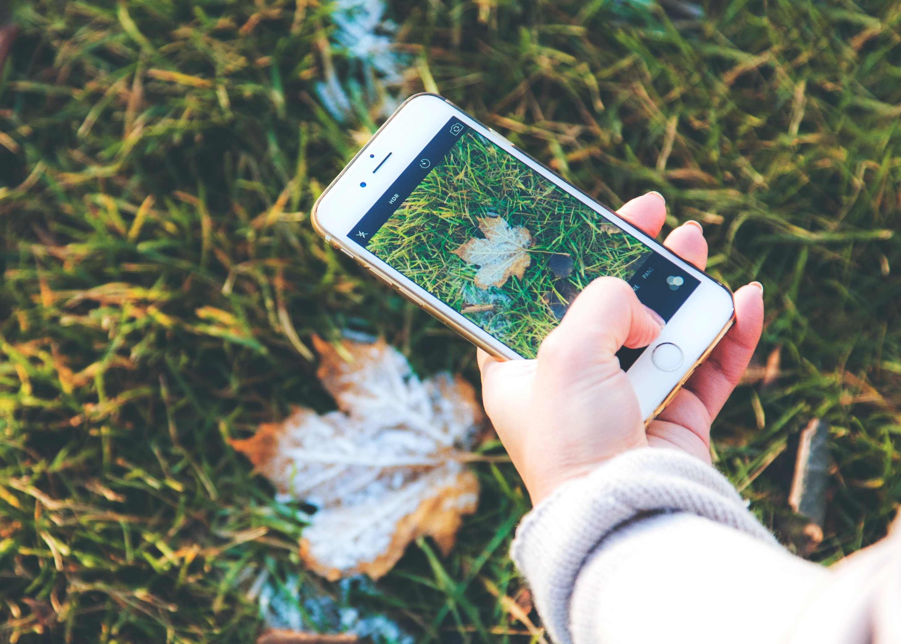 A person taking a photo of a frosty leaf on the grass with an iPhone Cellphone