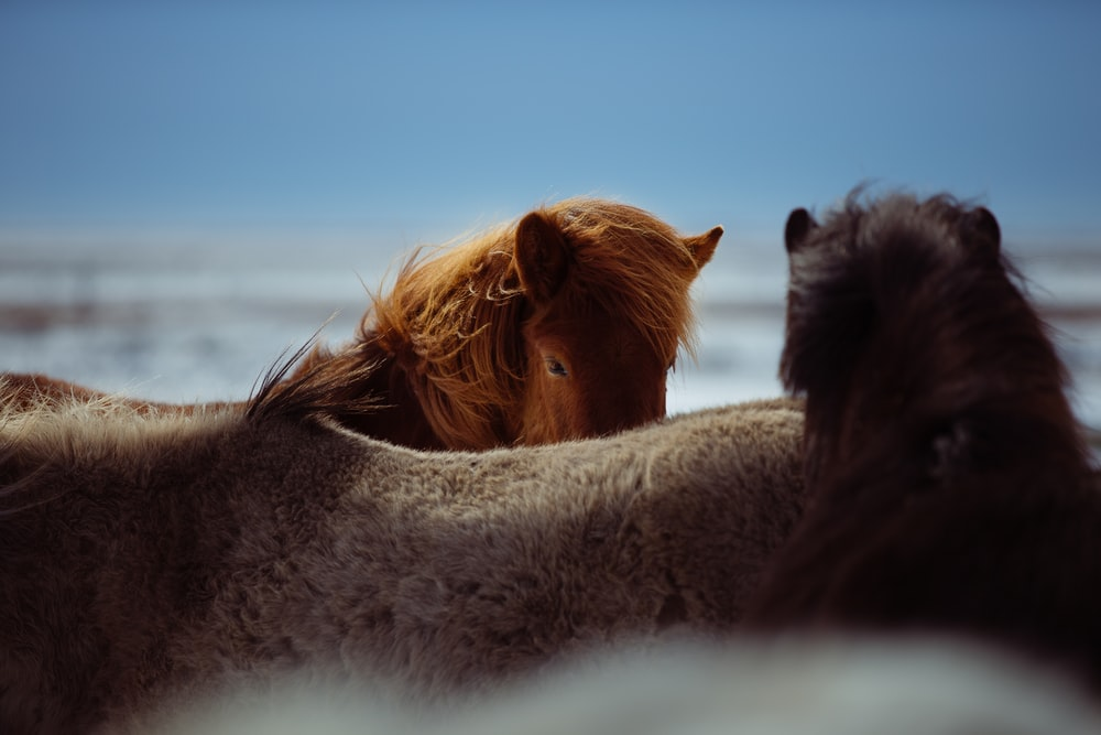 two brown horses in macro shot photography