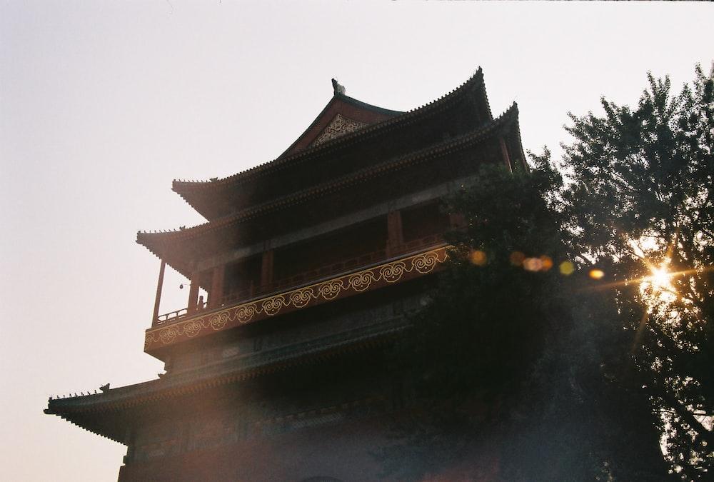 low angle photo of tree beside pagoda temple