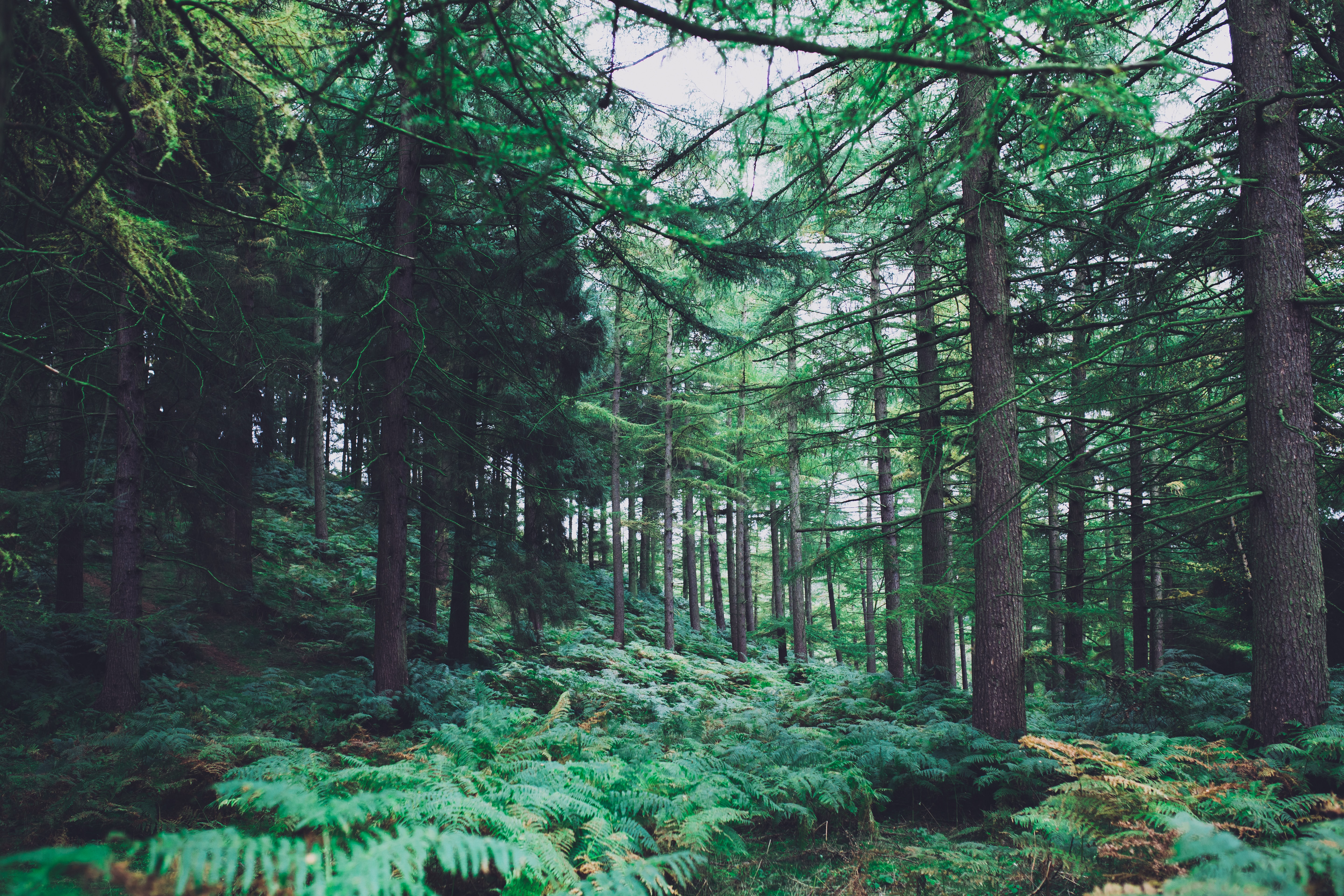 green foliage forest