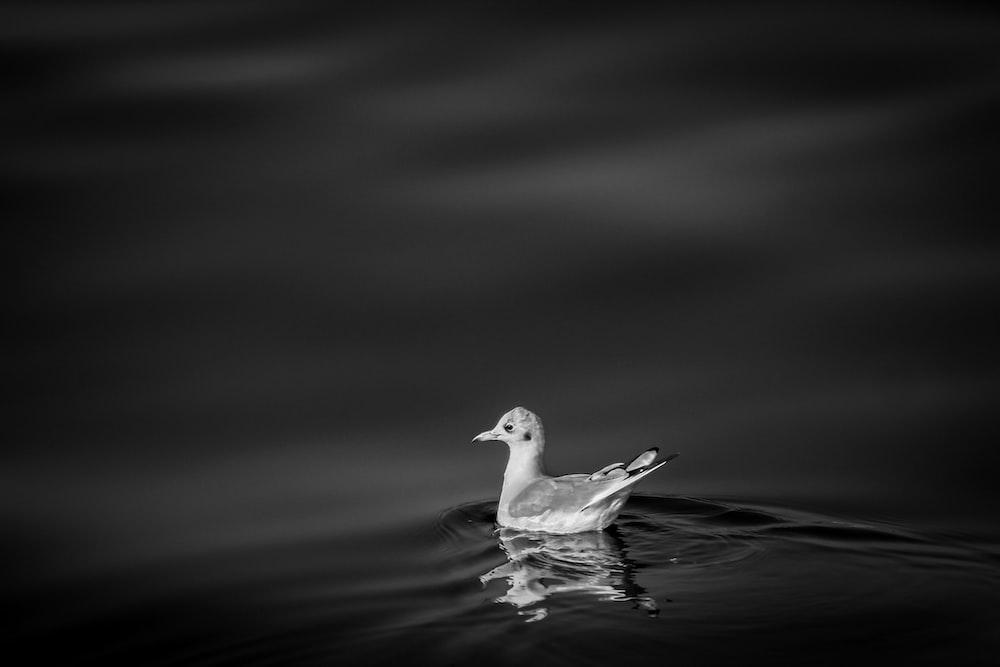 bird swimming during nighttime