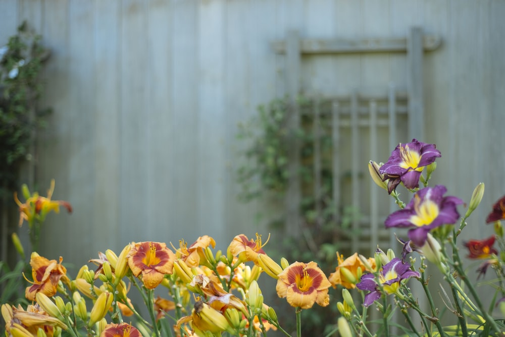 yellow and purple flowers in shallow focus shot