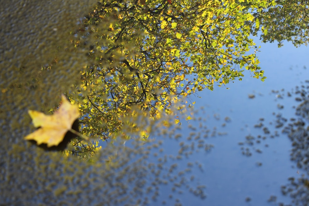 dried leaf on body of water