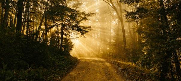 אור בהירות הדרך