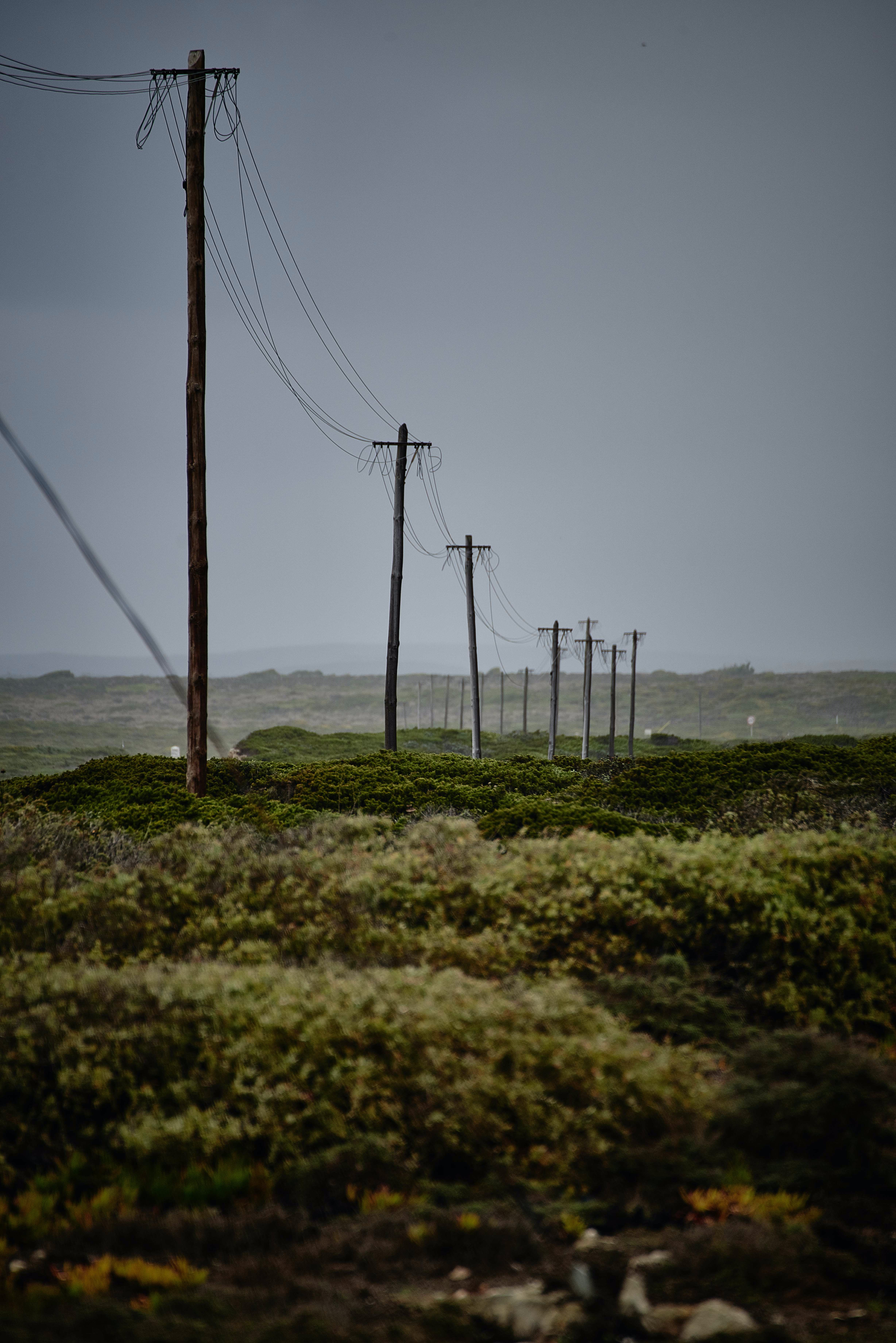 Telephone or power lines stretching out from the foreground to the distant horizon beside various bushes