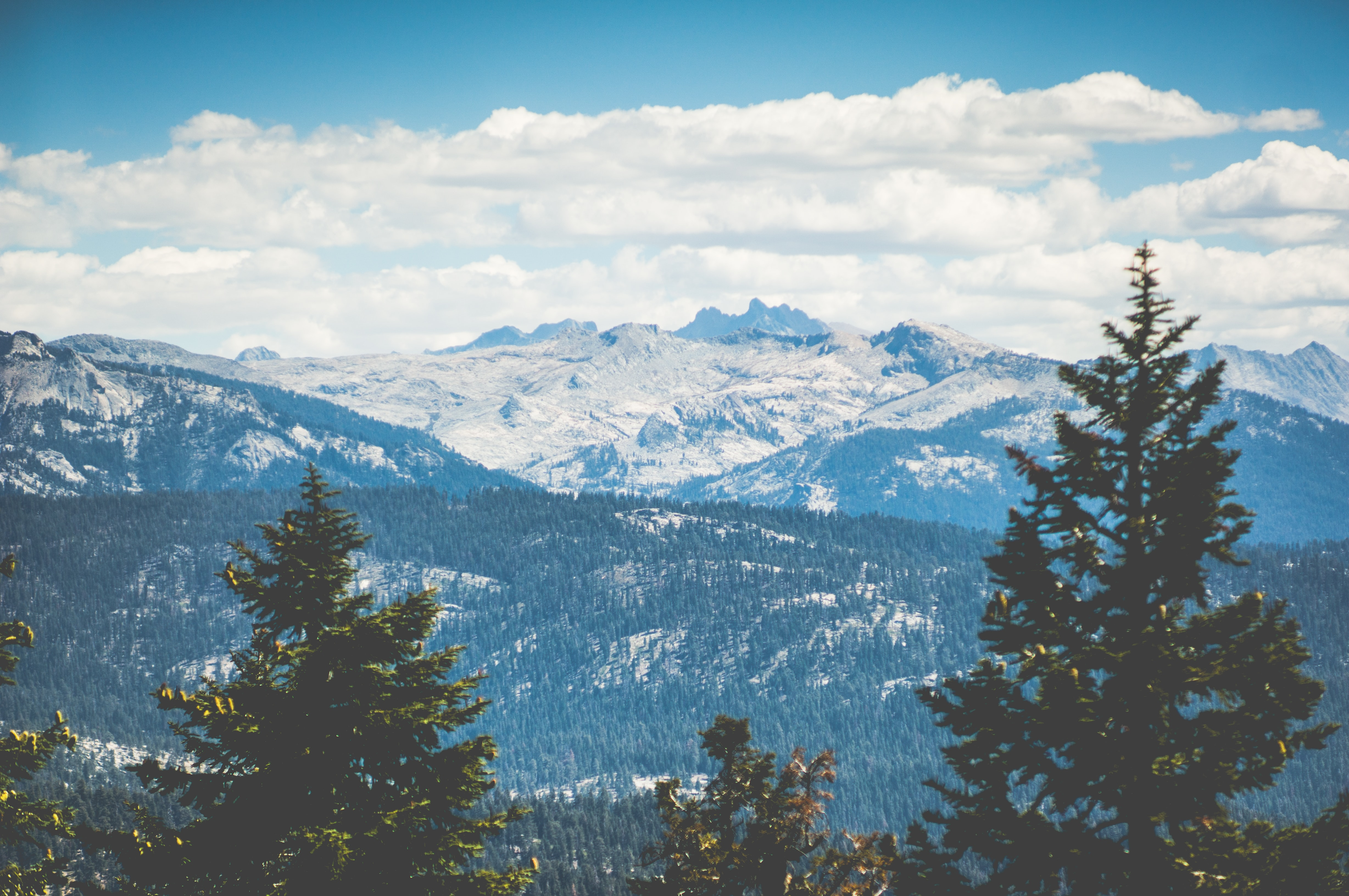 Evergreen forests and snowy mountain tops fill into the horizon at Sequoia National Park on a bright day