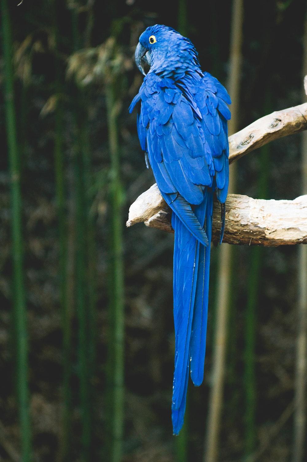 blue bird perch on brown tree
