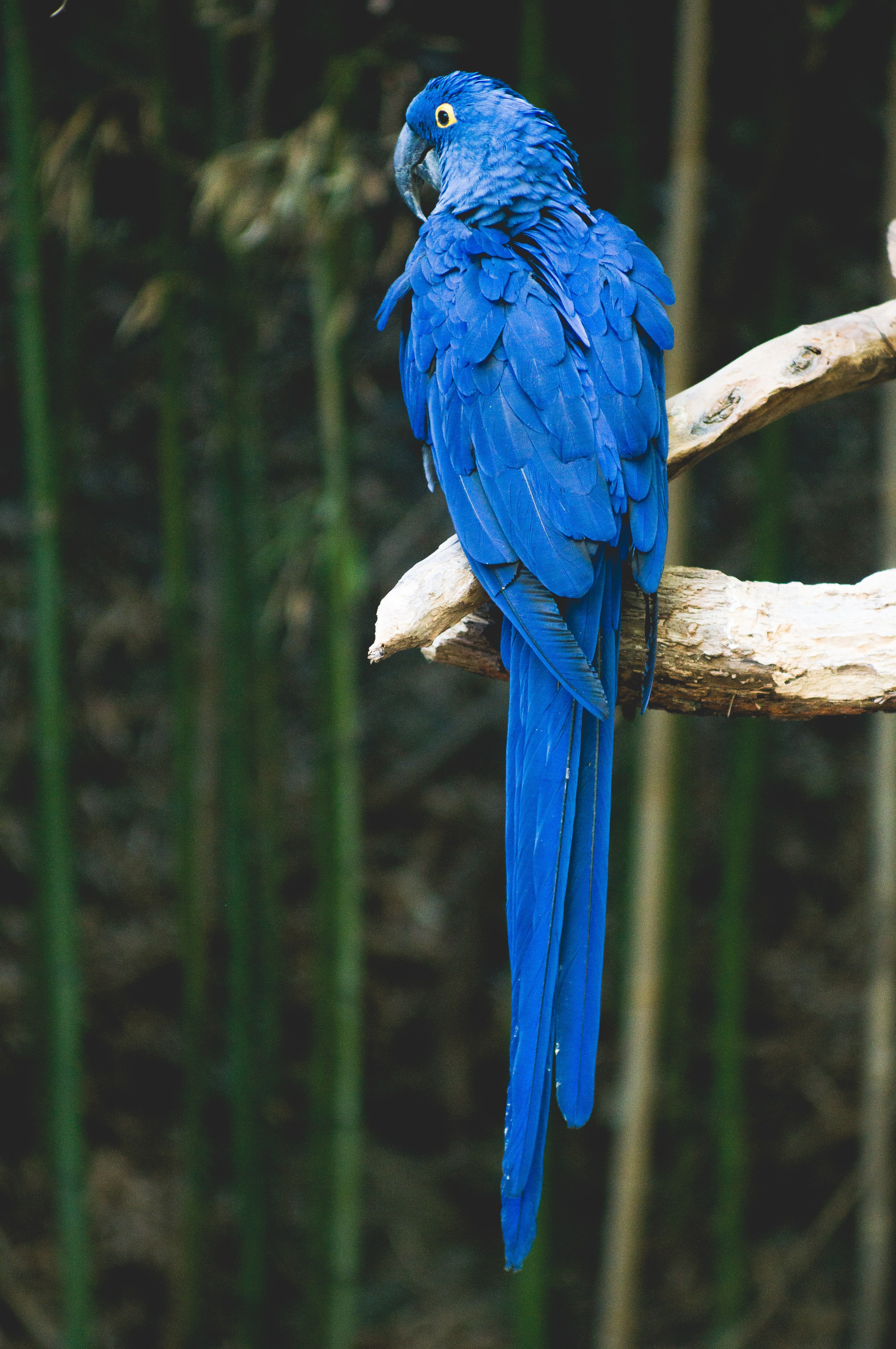 Colorful blue parrot with vibrant feathers perched on a branch