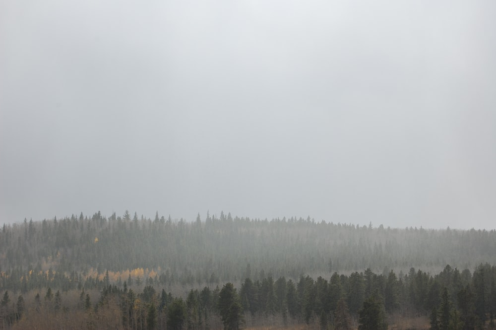 foggy forest during daytime