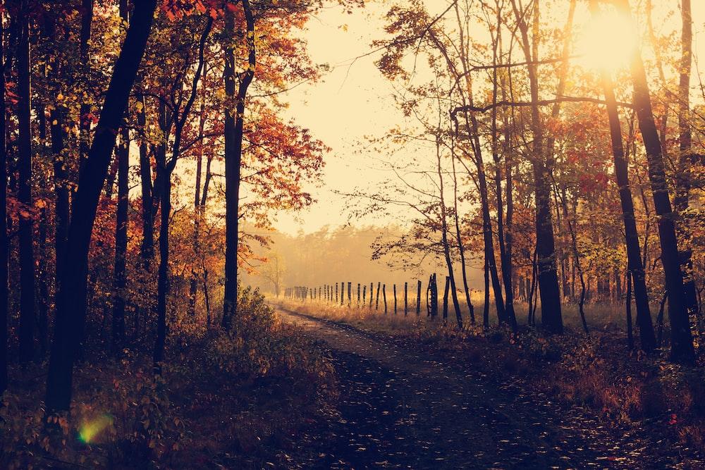 pathway between inline trees during golden hour