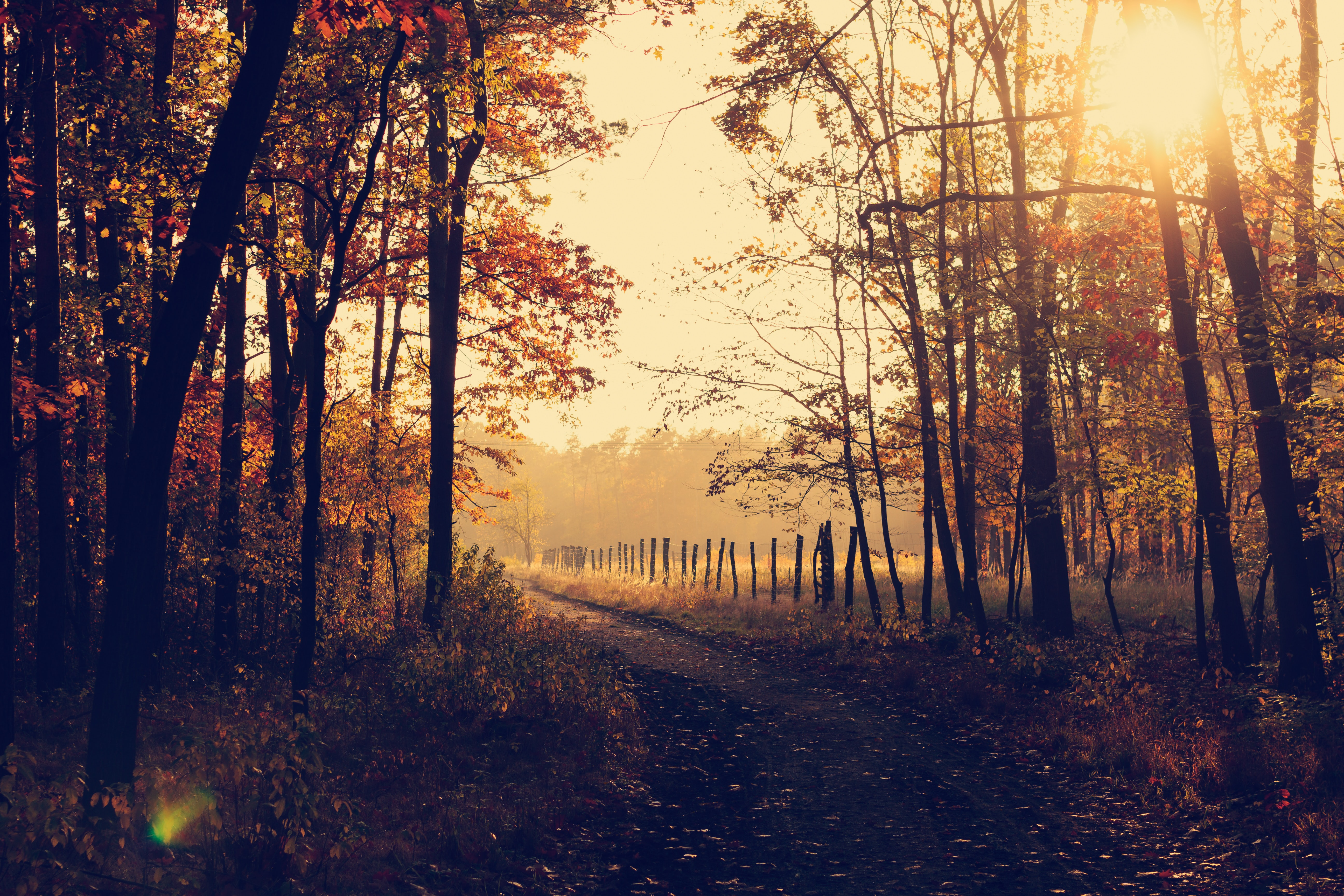 Nature Backgrounds  17 best free background, leafe, fall and leaf