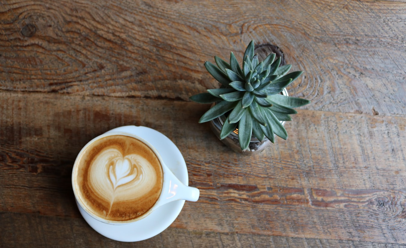 succulents-and-coffee