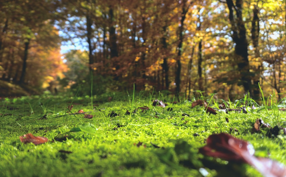selective focus photography of withered leaves on grass