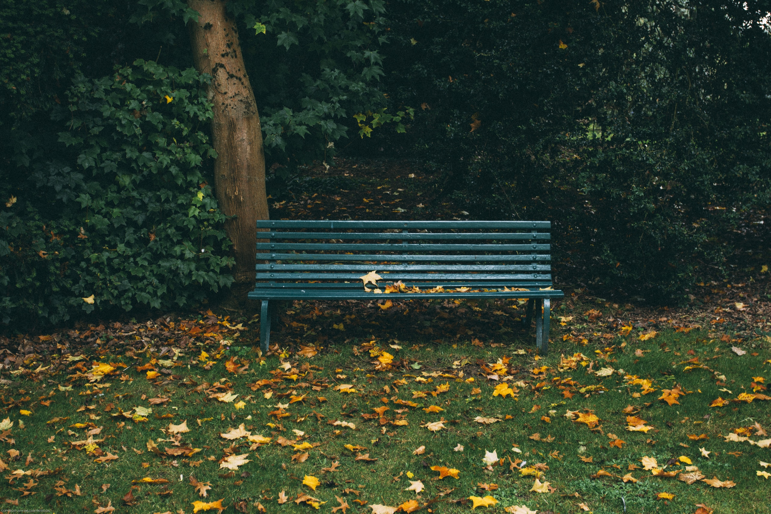 green wooden bench and autumn leaves on grass covered field near trees during day