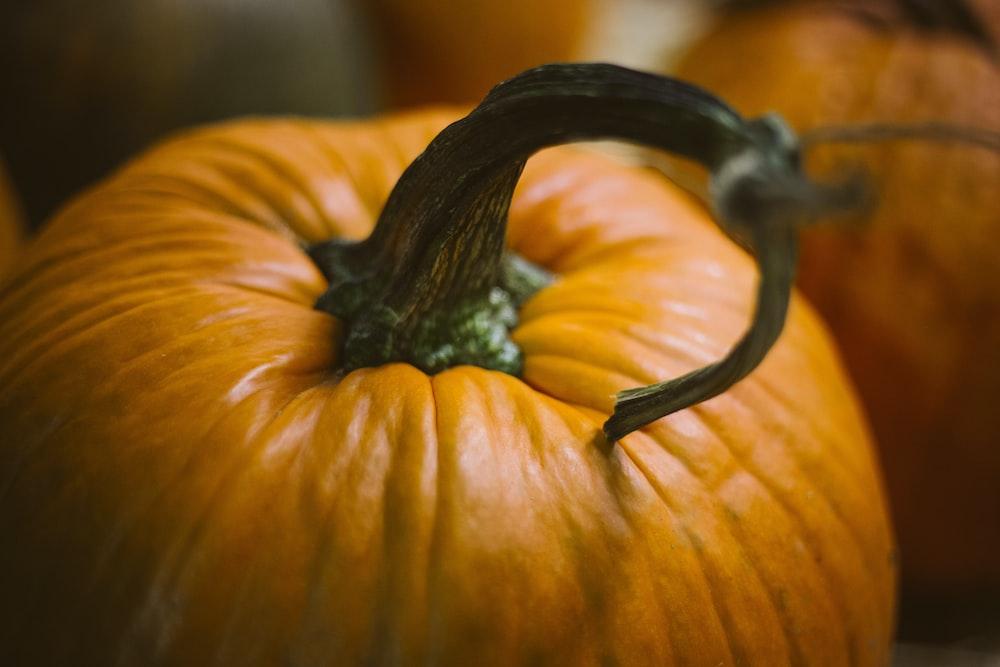 close up photography of pumpkin