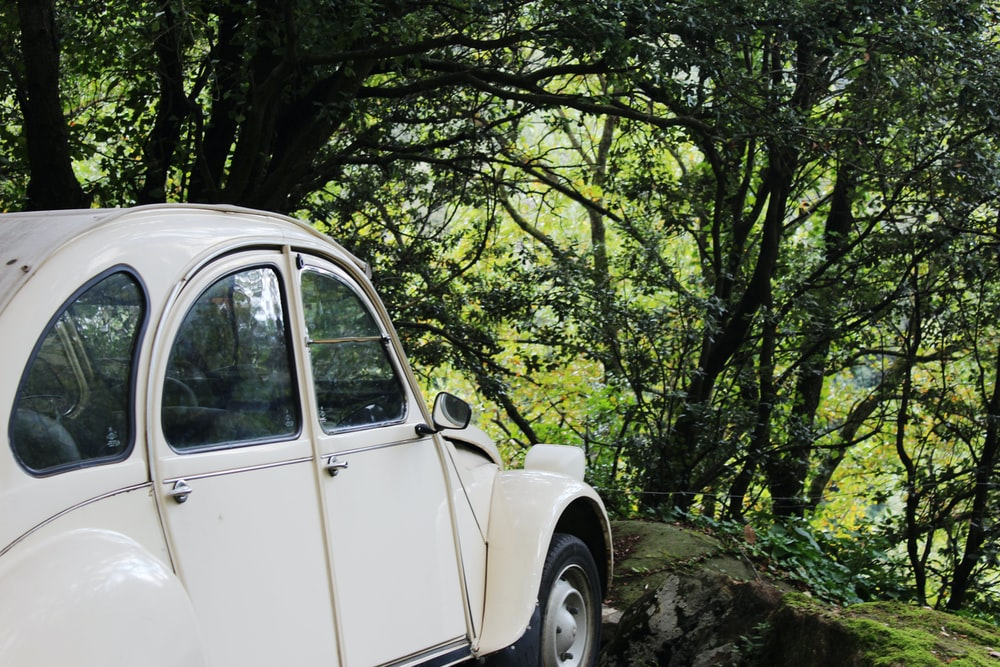 white beetle car in the middle of green trees