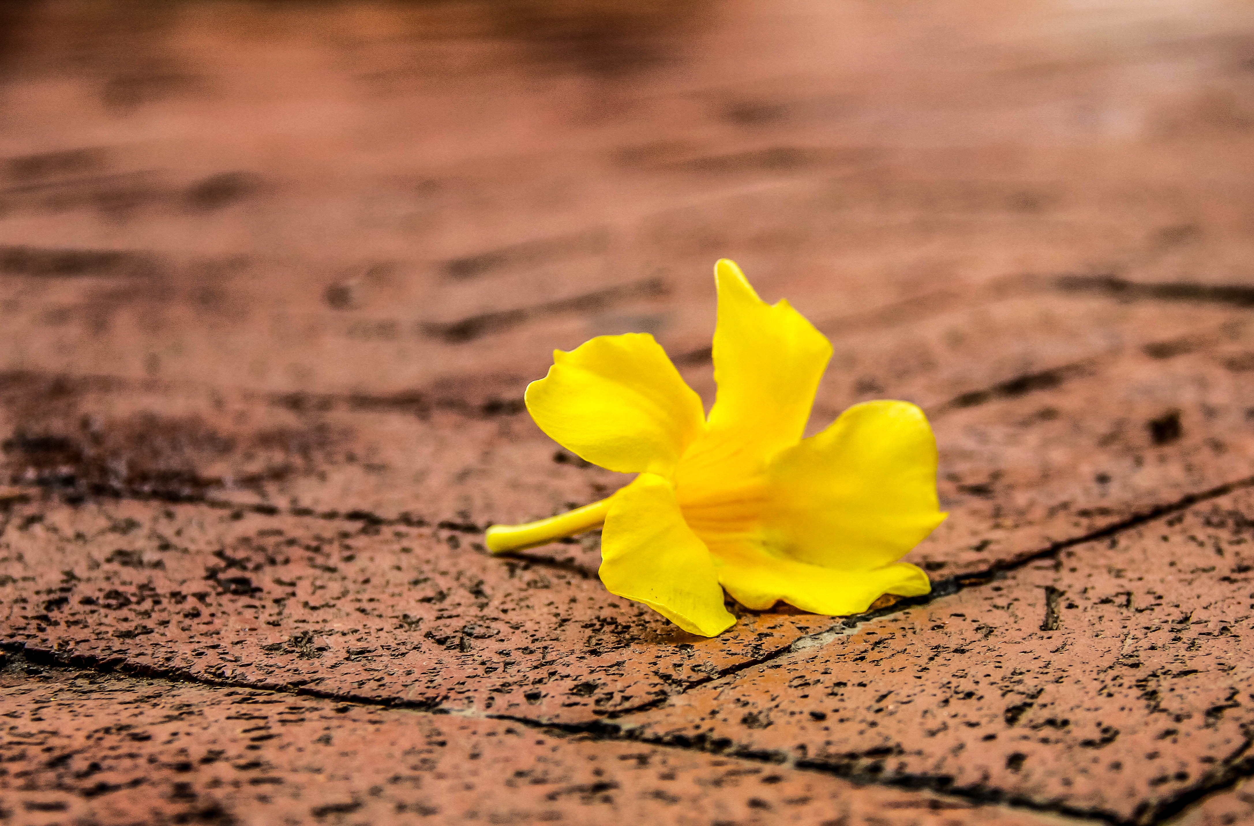 yellow petaled flower on gray brick floor