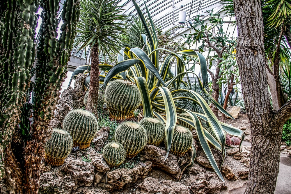 green cactus on rocks